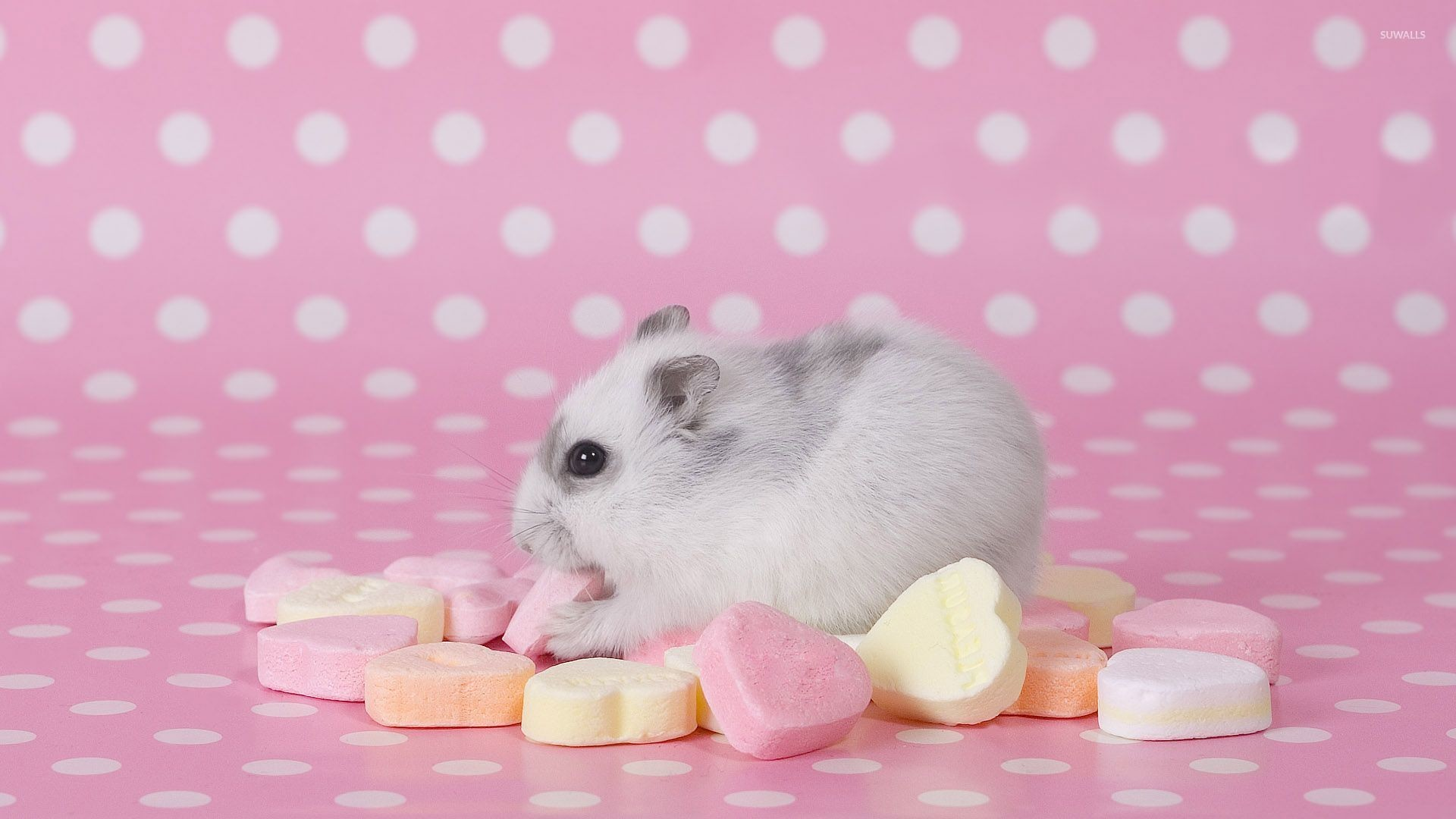 Res: 1920x1080, Hamster eating candy wallpaper  jpg