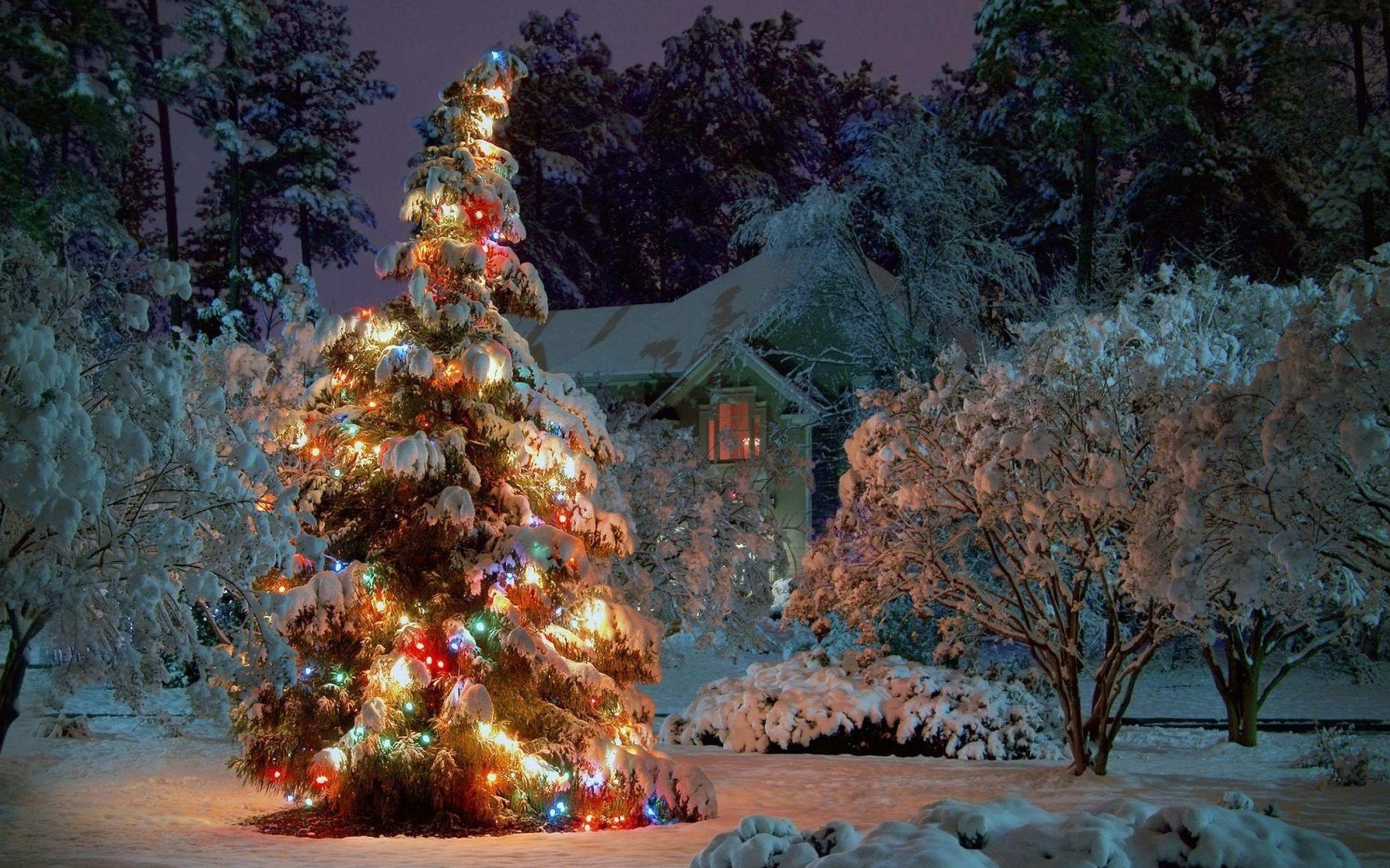 Res: 2880x1800, animated hd best christmas. floral 3d wallpaper