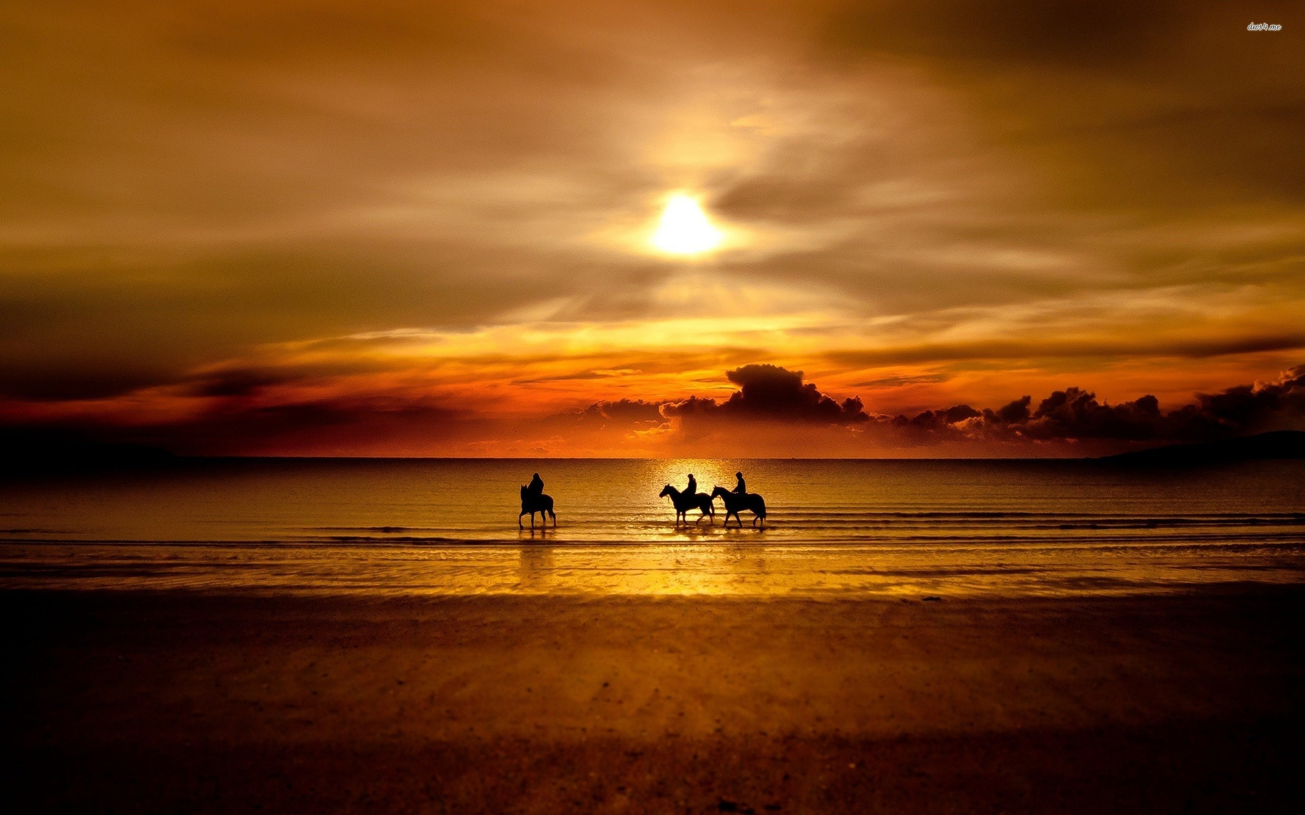 Res: 2560x1600, Horse Sunset Wallpapers Widescreen