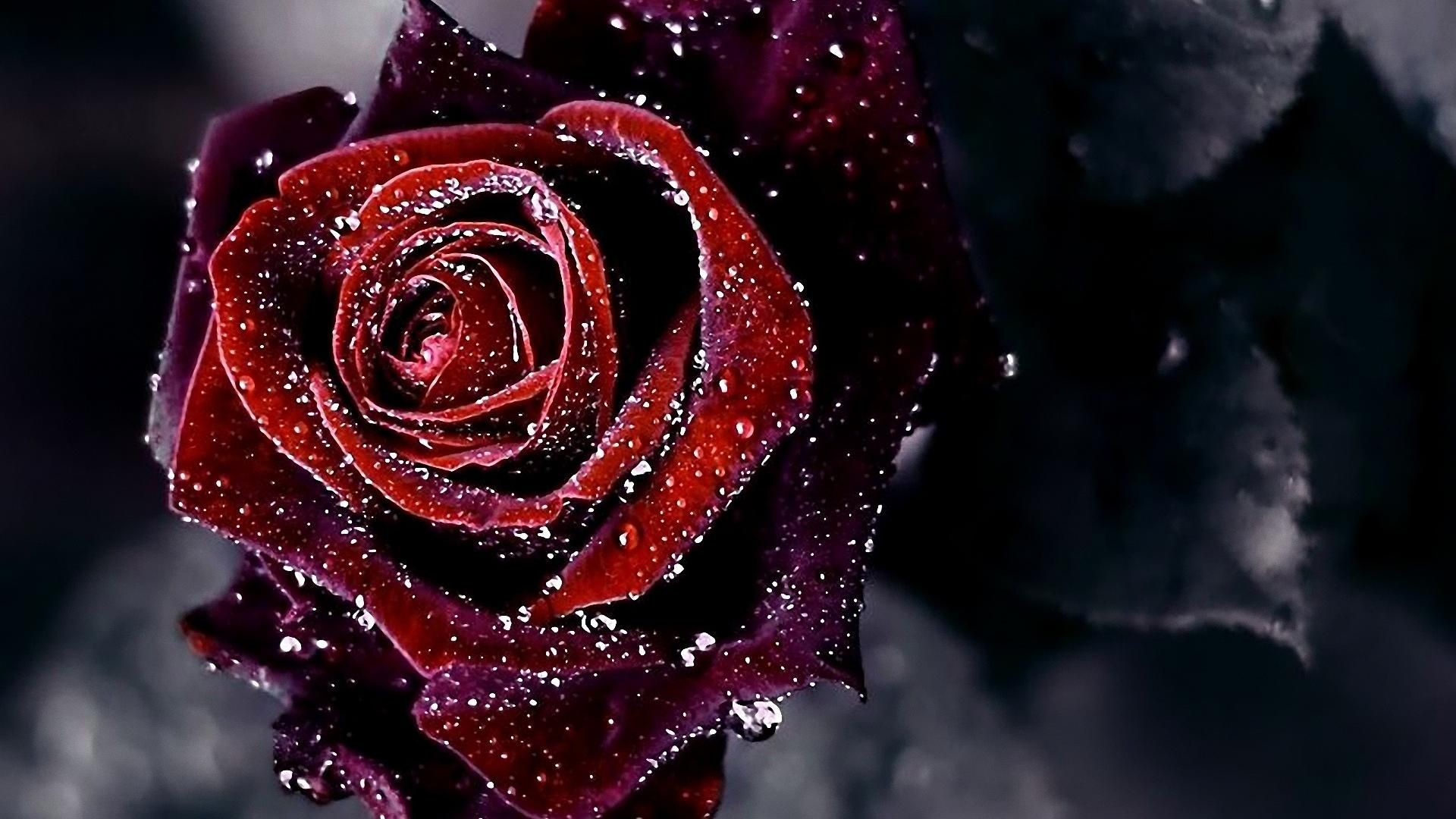 Res: 1920x1080, Red Flowers Wallpaper HD #1