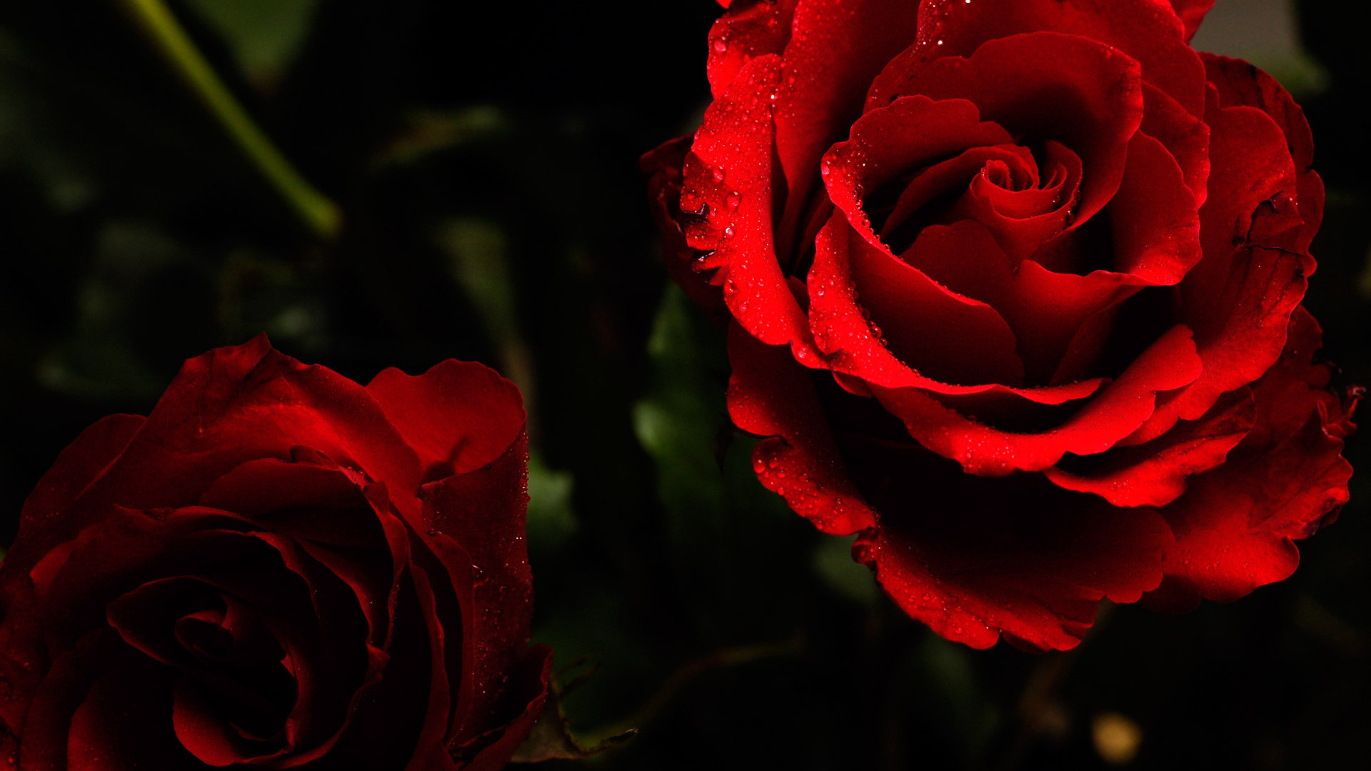 Res: 1920x1080, Red Flowers Wallpaper