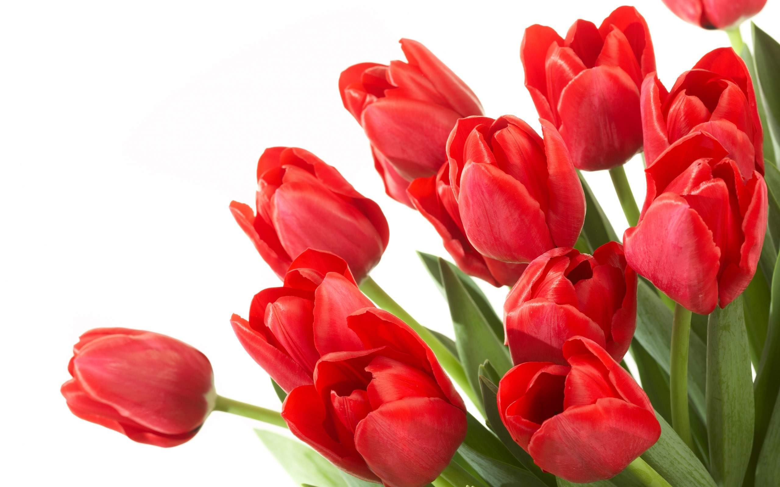 Res: 2560x1600, Red Flowers