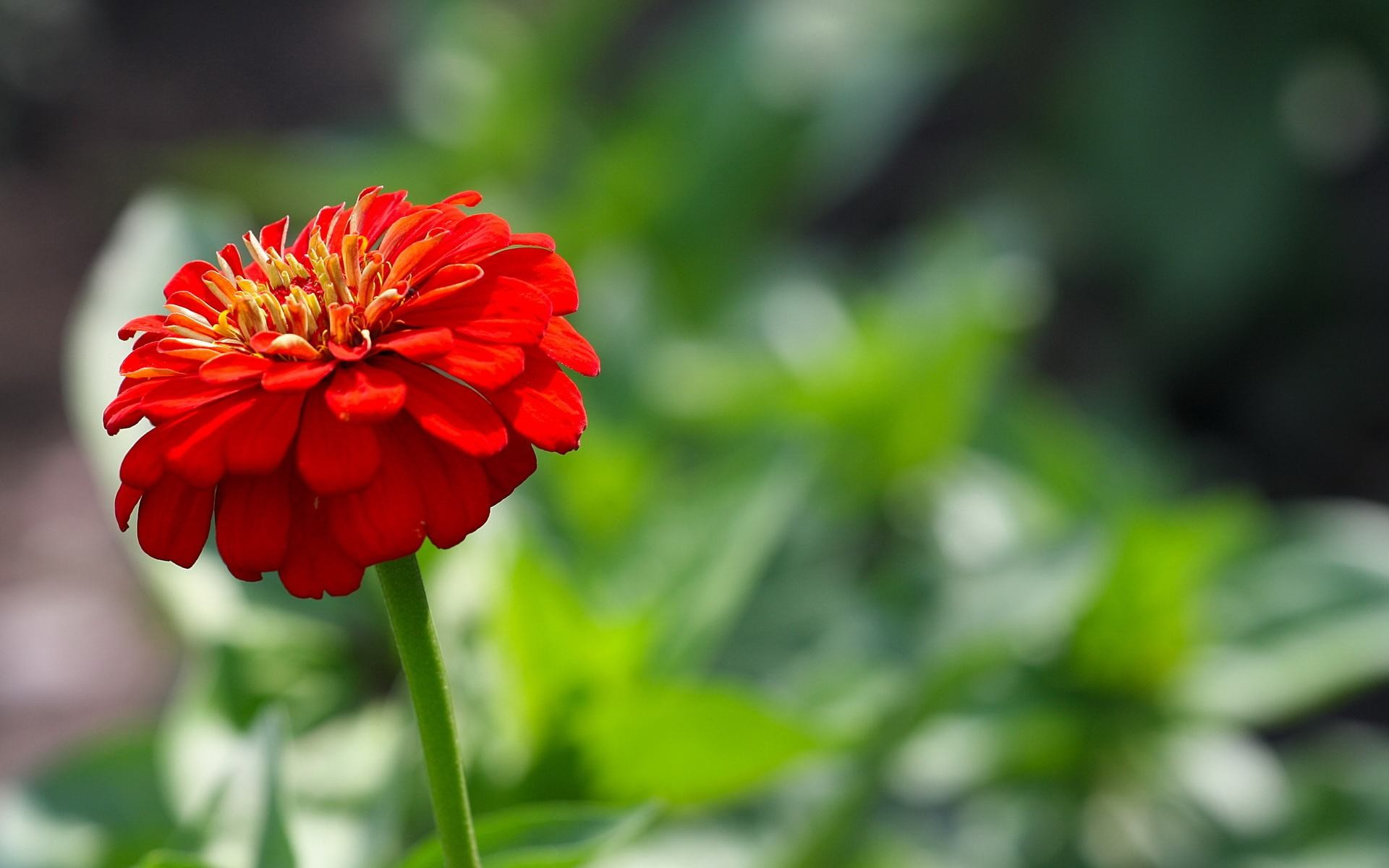Res: 1920x1200, Summer Red Flowers | 1920 x 1200 | Download | Close