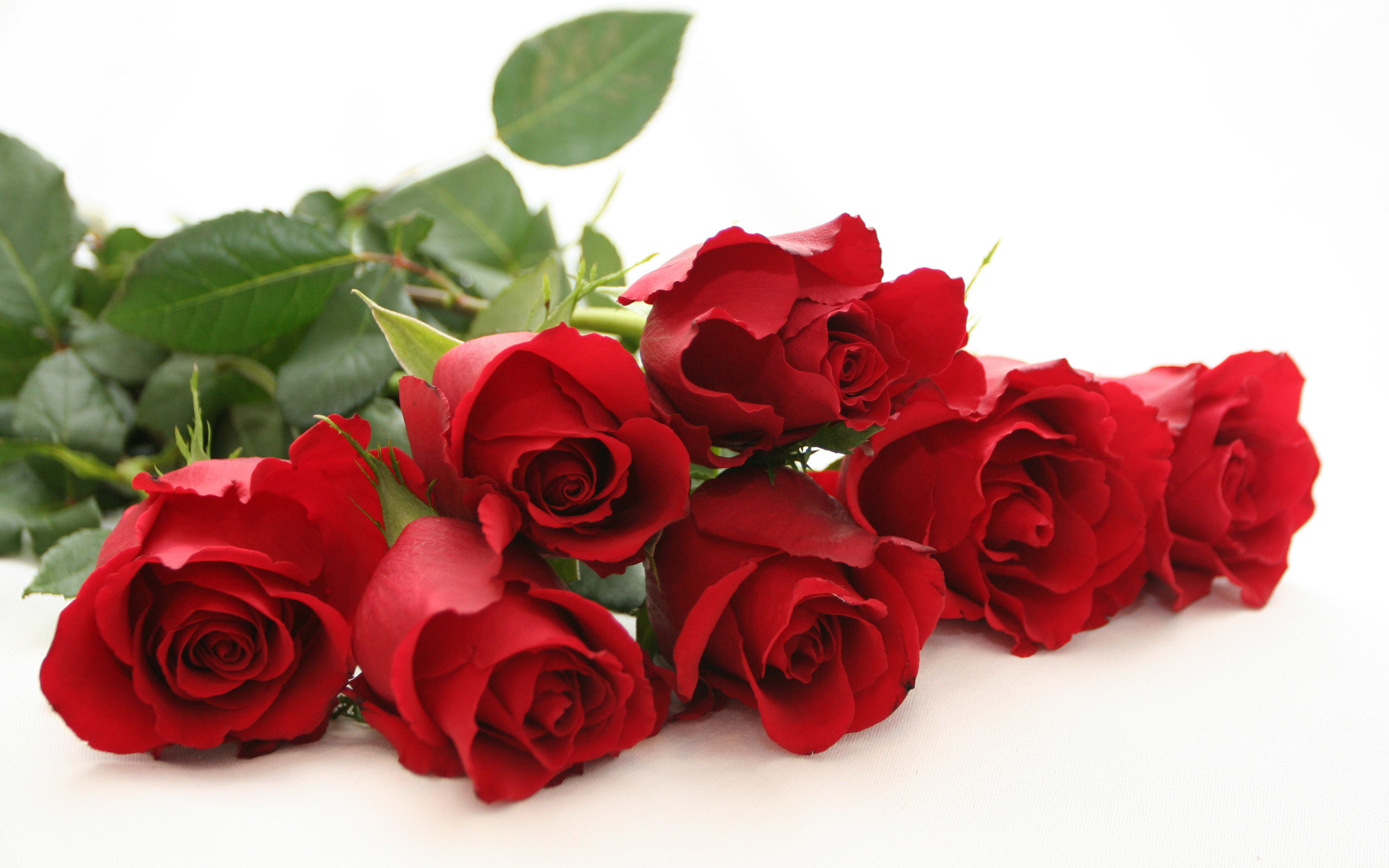 Res: 2560x1600, red roses