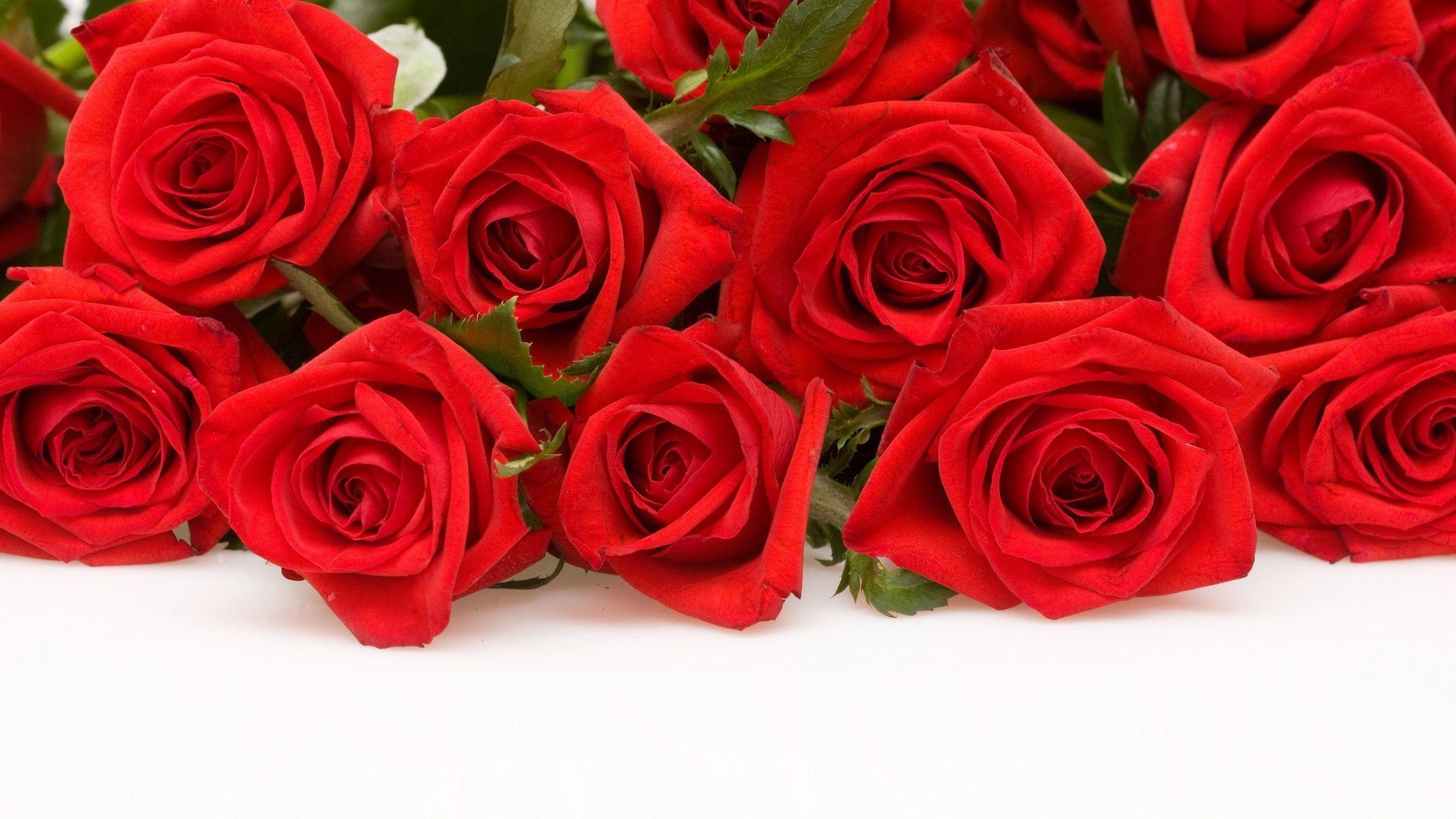 Res: 2560x1440, Wallpapers For > Red Rose Wallpaper Desktop