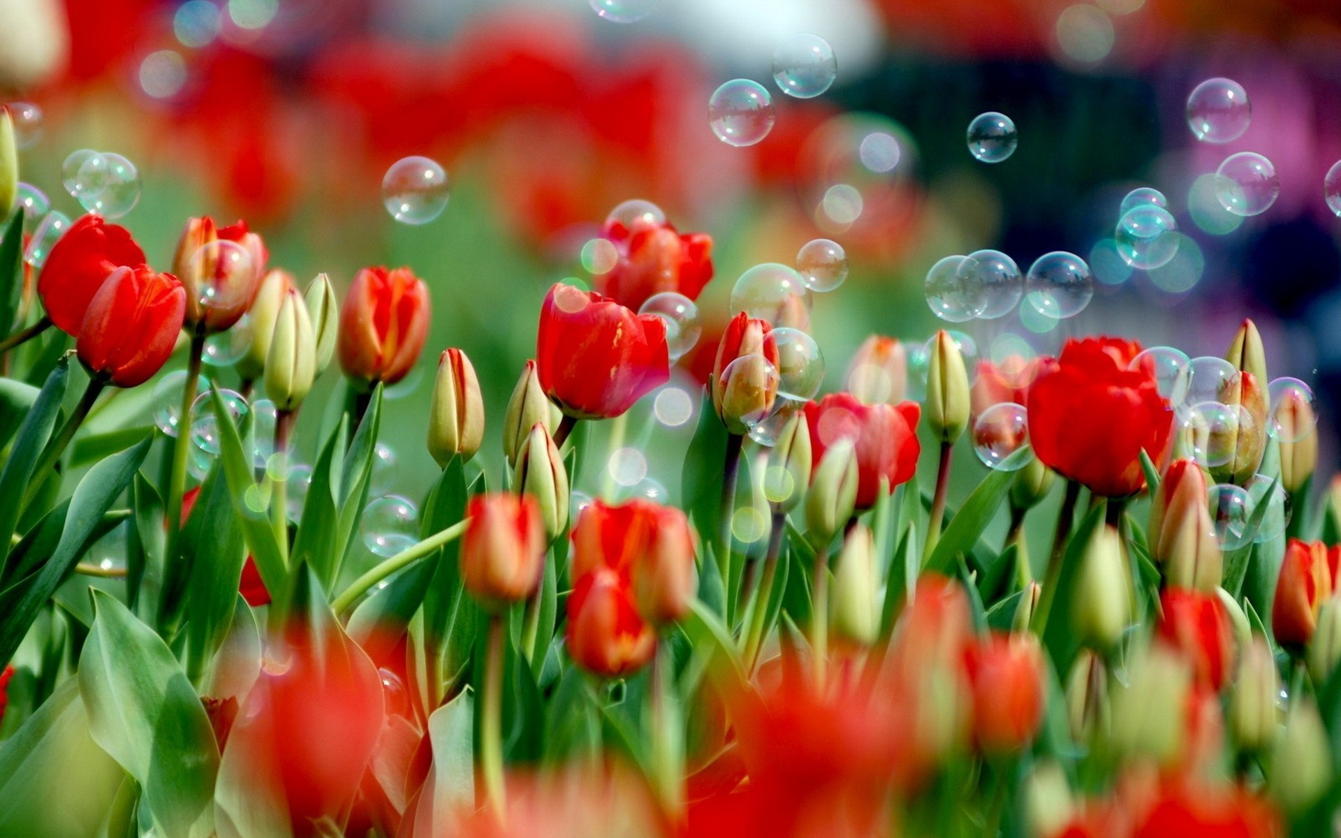 Res: 1920x1200, Red Flowers 33699