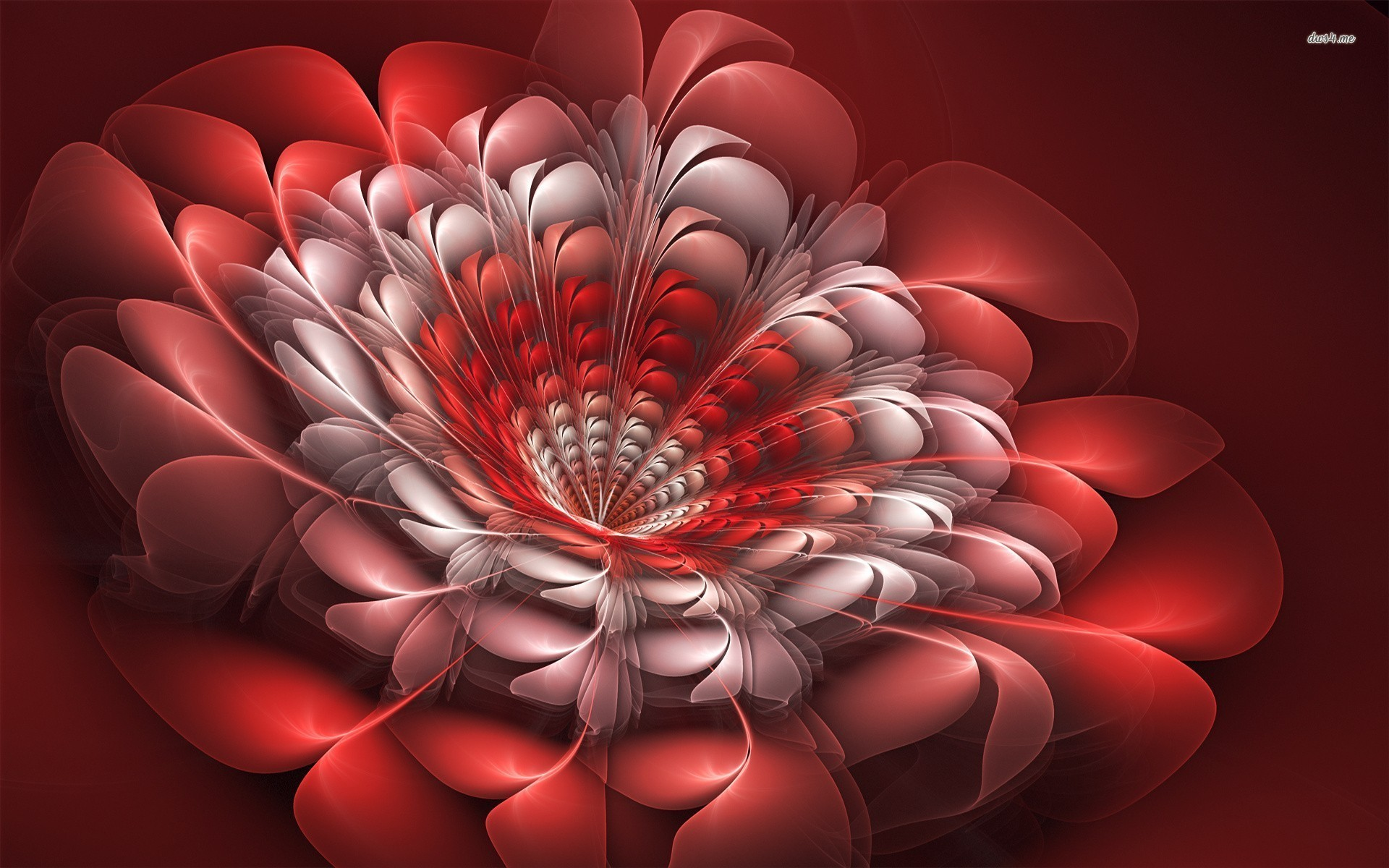 Res: 1920x1200, ... Red flower wallpaper  ...