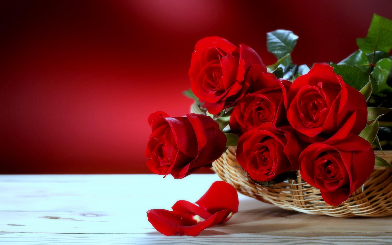 Res: 2880x1800, Red roses desktop flowers wallpaper