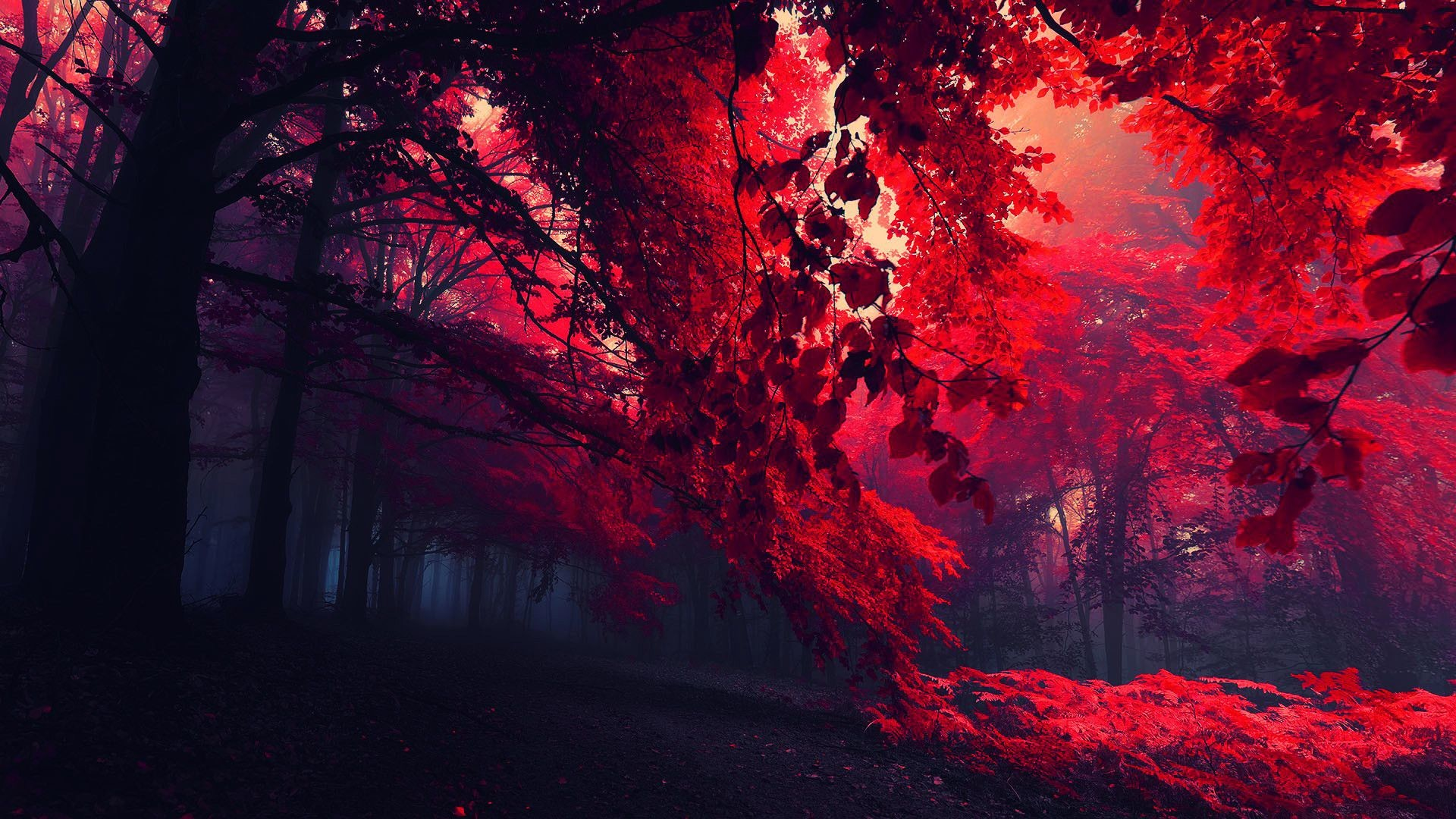 Red Nature Wallpapers Hd Wallpaper Collections