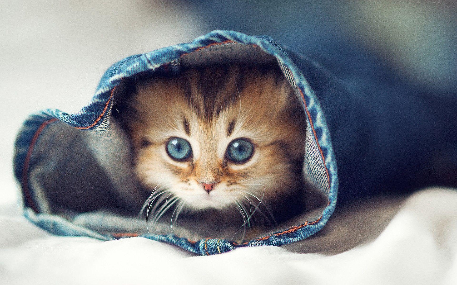 Res: 1920x1200, Download Cute Cats Wallpaper  855 Full HD Wallpaper .