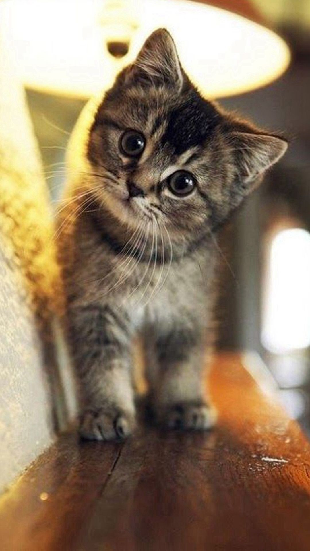 Res: 1080x1920, Cute Cat Wallpaper iPhone - Best iPhone Wallpaper