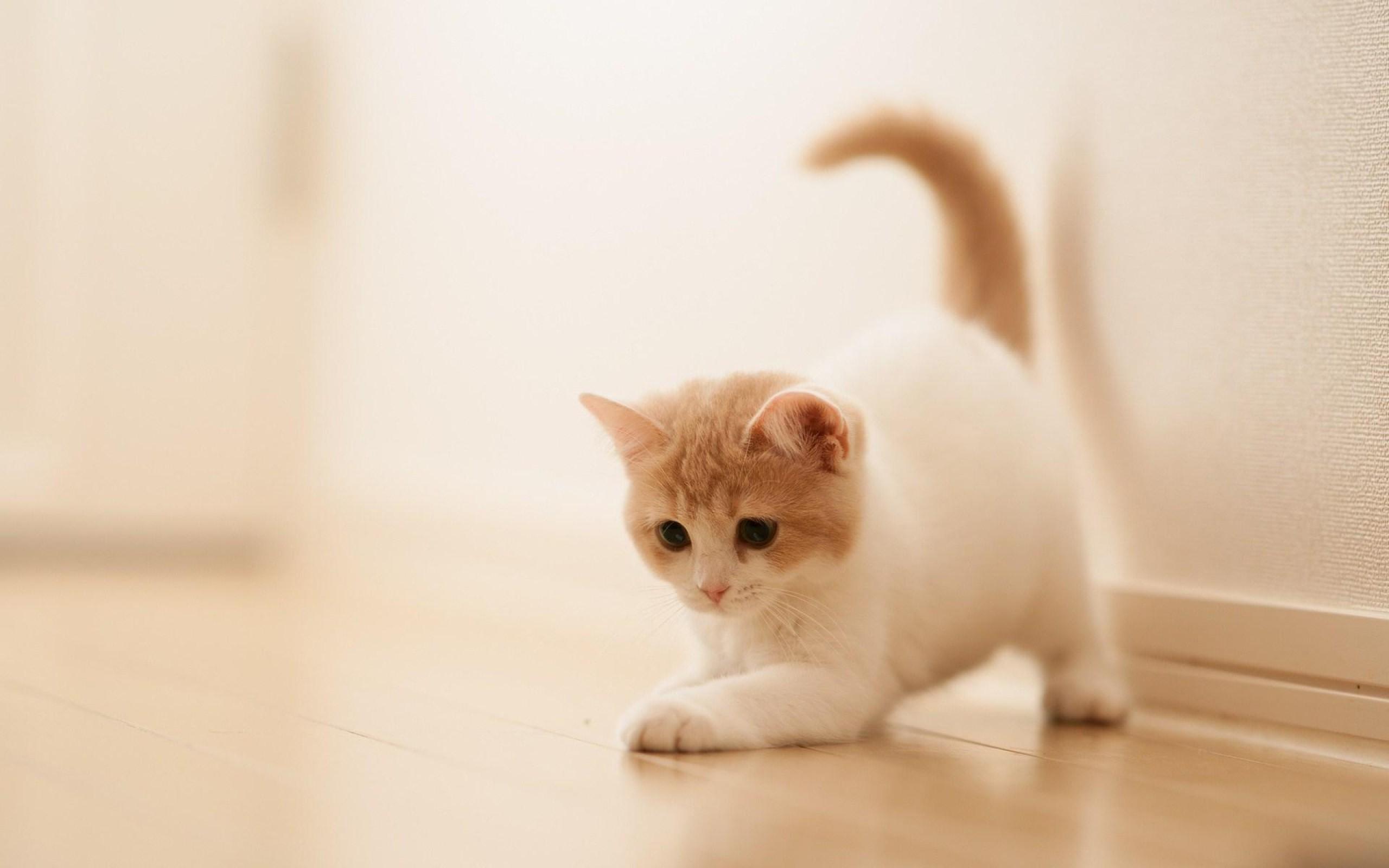 Res: 2560x1600, Cute Little Kitten