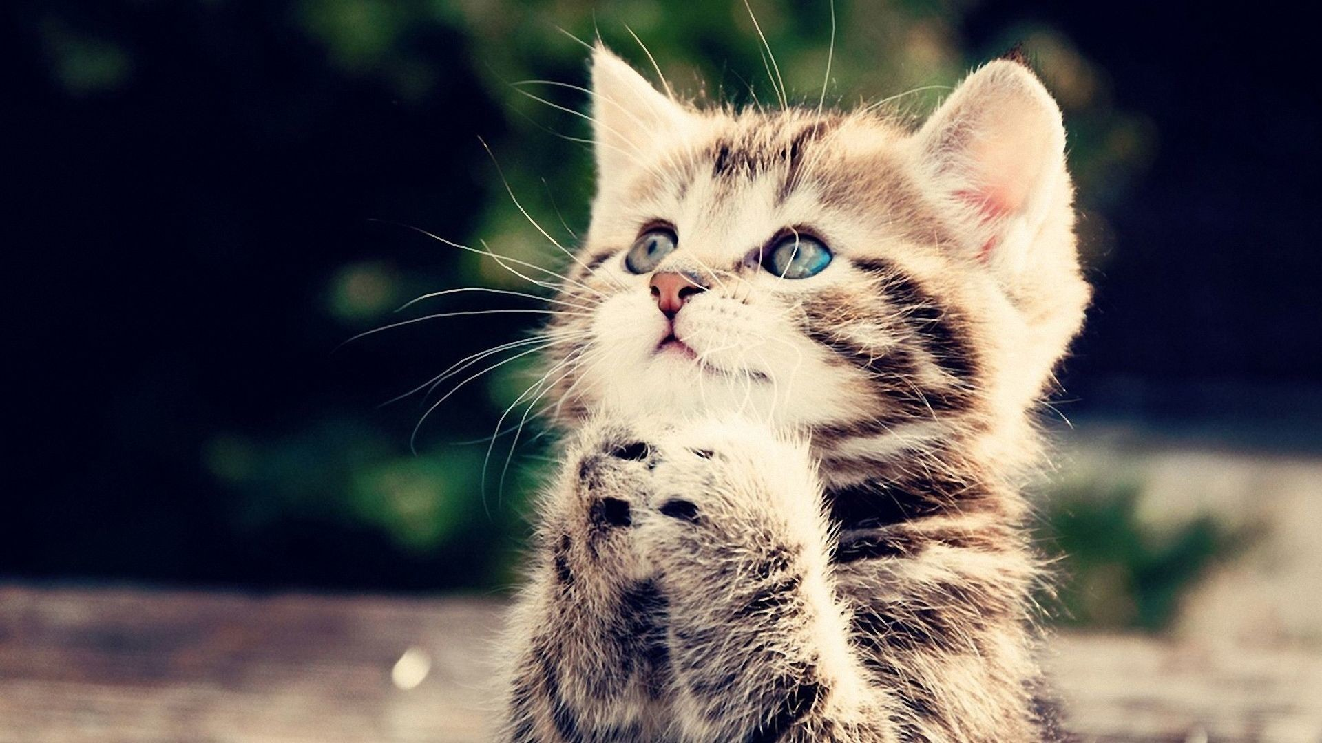 Res: 1920x1080, Black and White Cute Cat Wallpaper