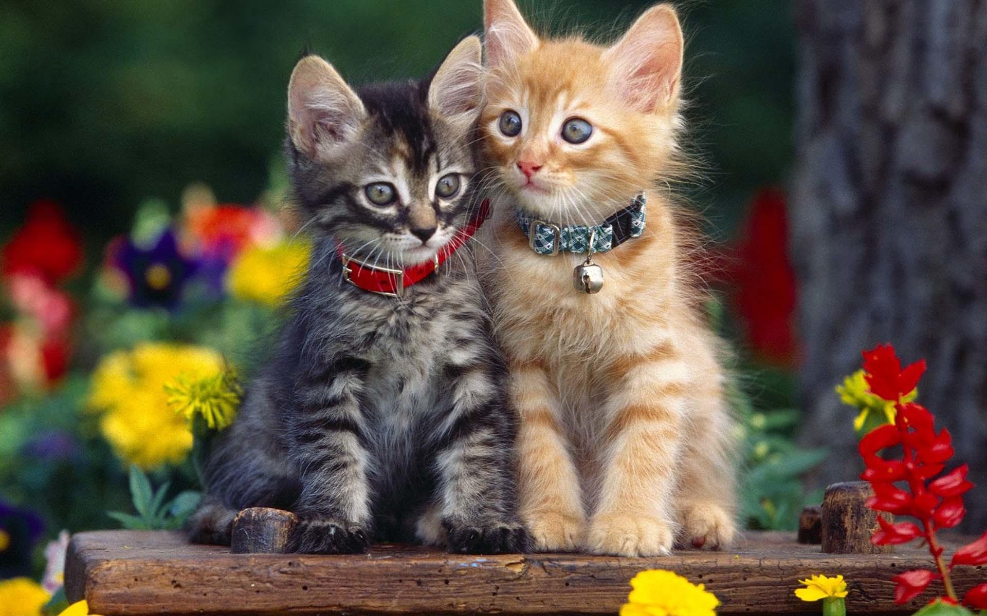 Res: 1920x1200, Cute Cat Wallpaper HD.