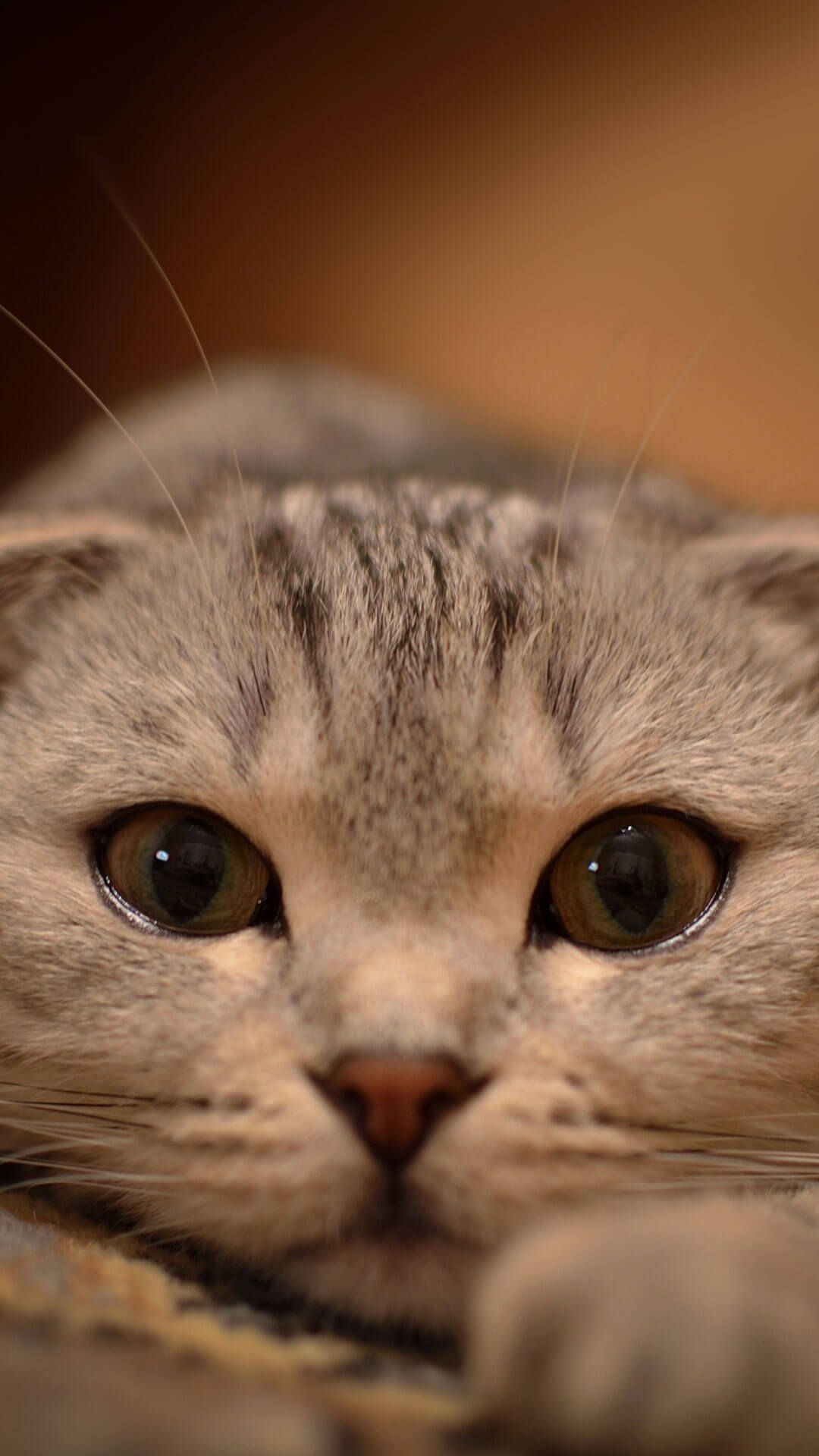 Res: 1080x1920, Cute Cat Wallpaper For iPhone 6 Plus HD