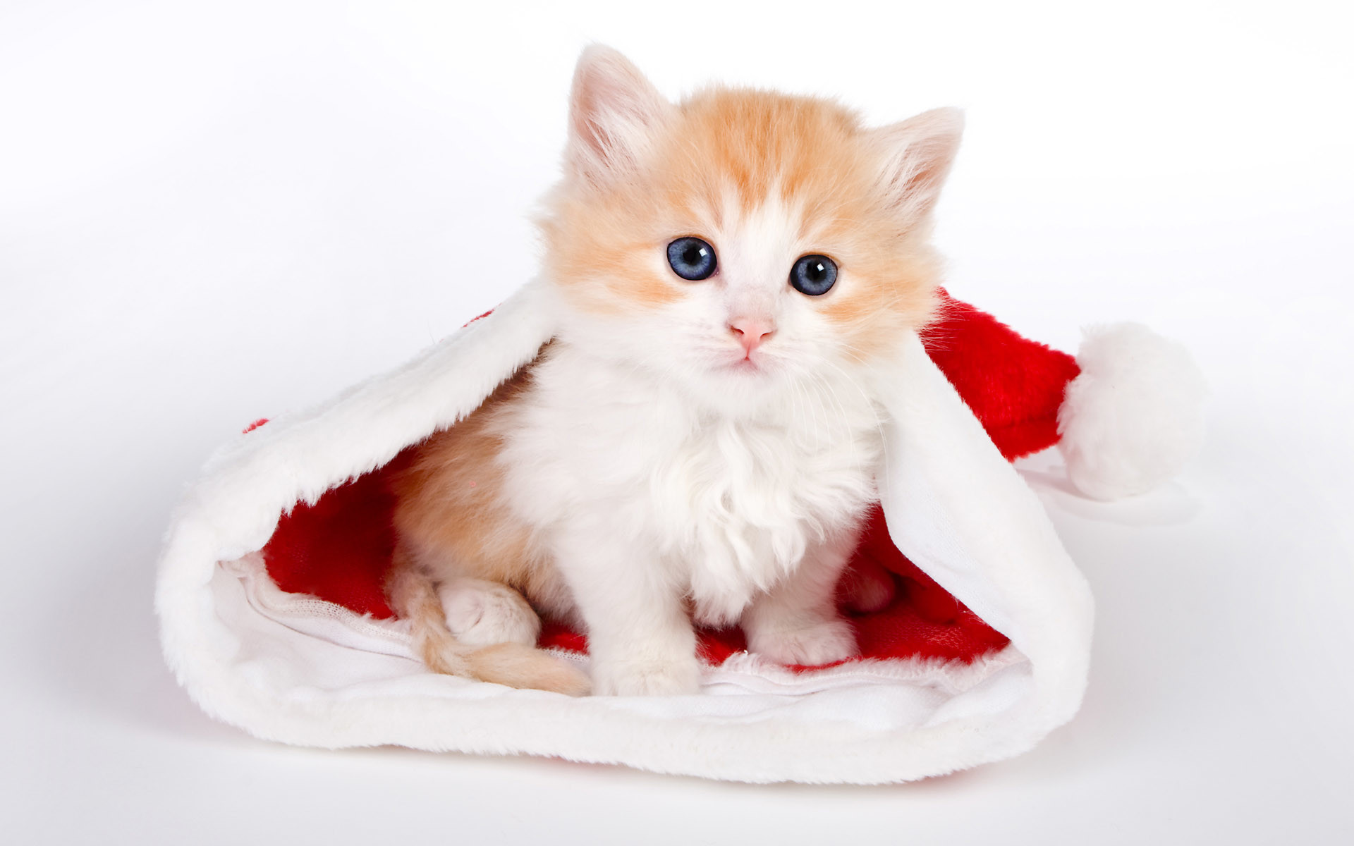 Res: 1920x1200, Cute Cats Wallpaper