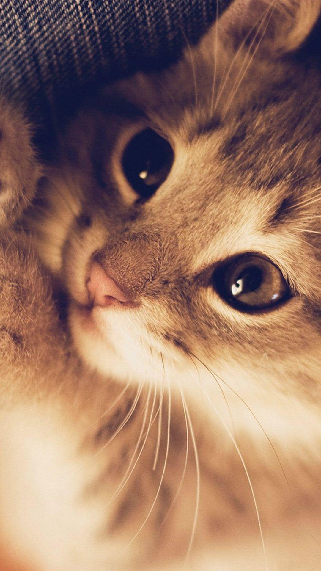 Res: 1080x1920, Cute kittie