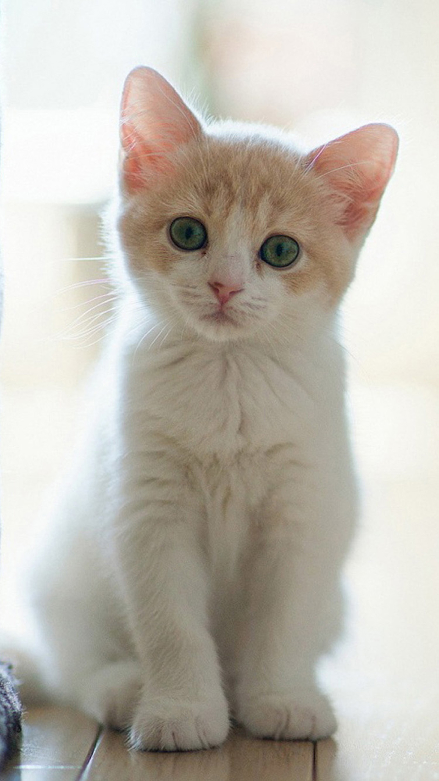 Res: 1440x2560, ... High Quality Cute Cat Wallpapers | Full HD Pictures ...