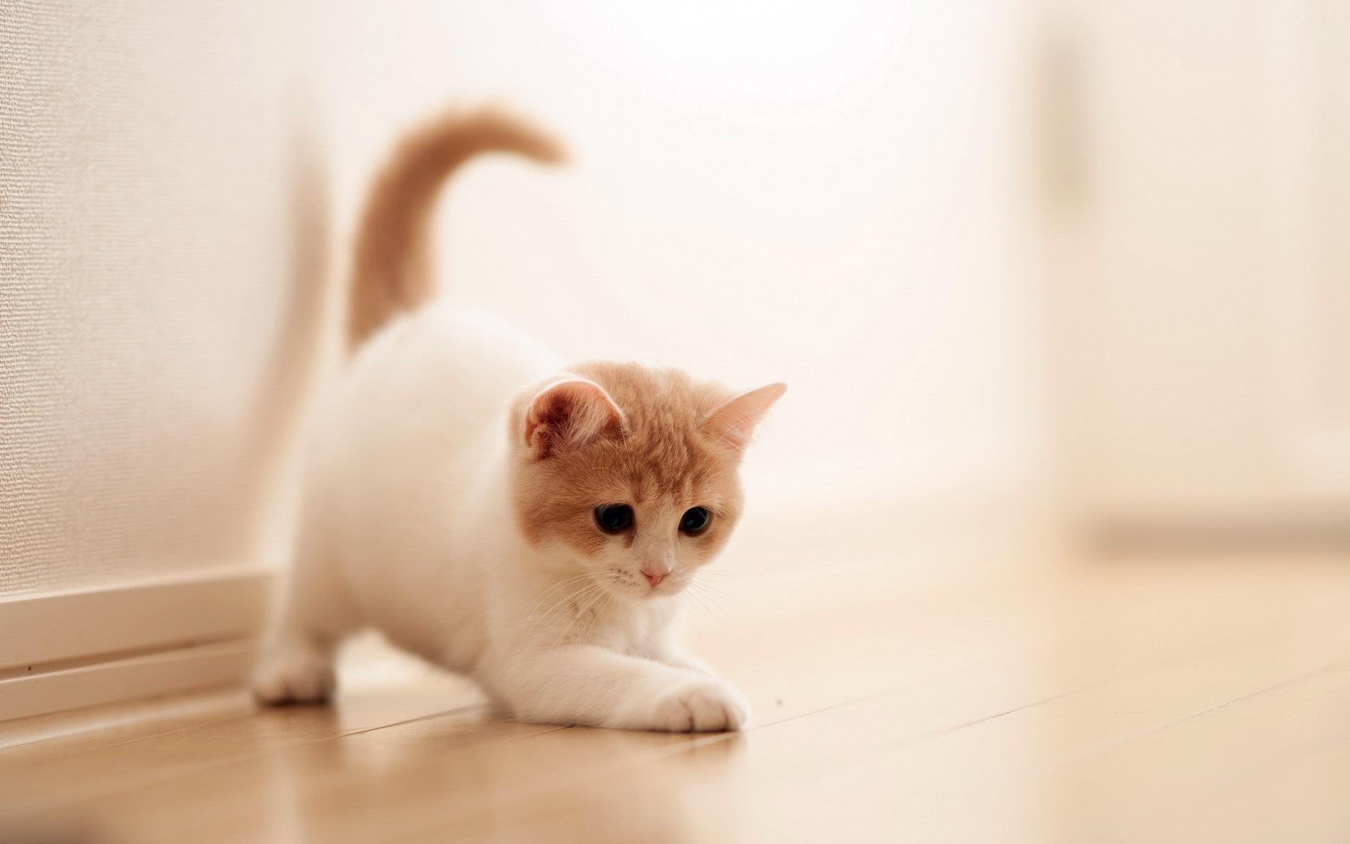Res: 1920x1200, Cat ...