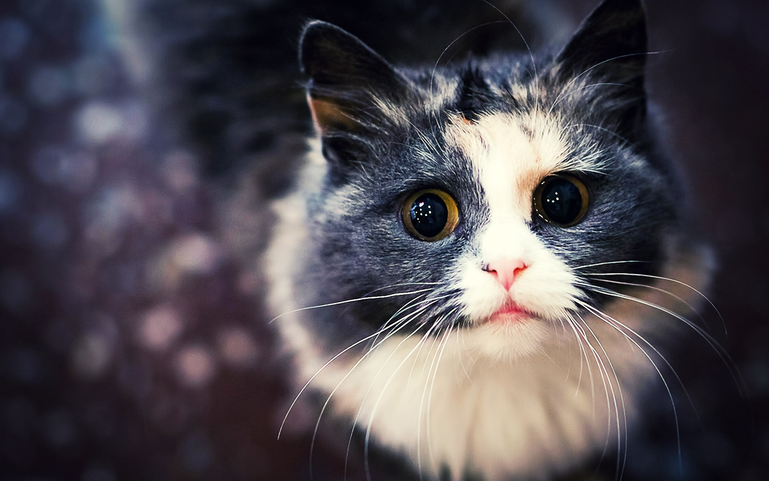 Res: 2560x1600, Amazing 10 Thousand Cute Cat Wallpapers