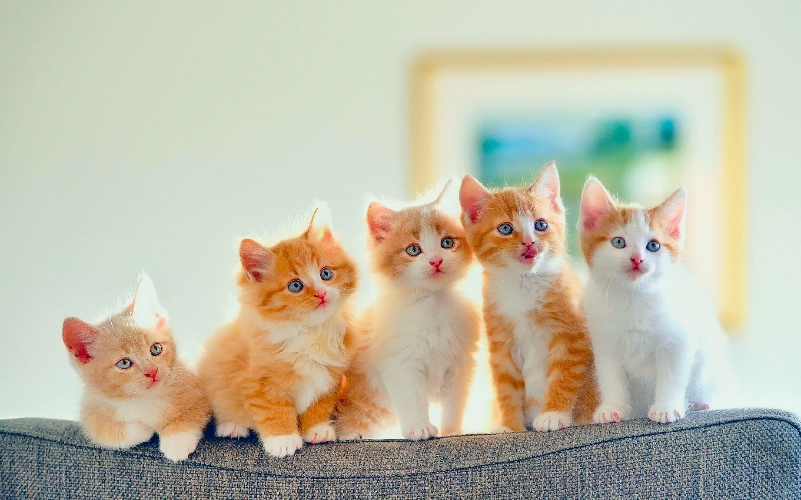 Res: 2560x1600, Cute Cats Wallpaper Download For Desktop, PC & Mobile