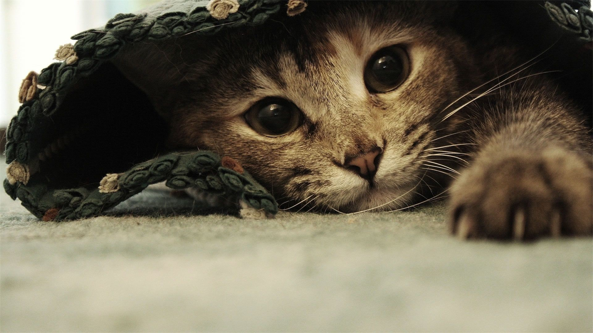 Res: 1920x1080, funny pictures | Funny Cats Wallpapers 20 |HD Wallpapers Fan | Full HD  Wallpapers 1080p .