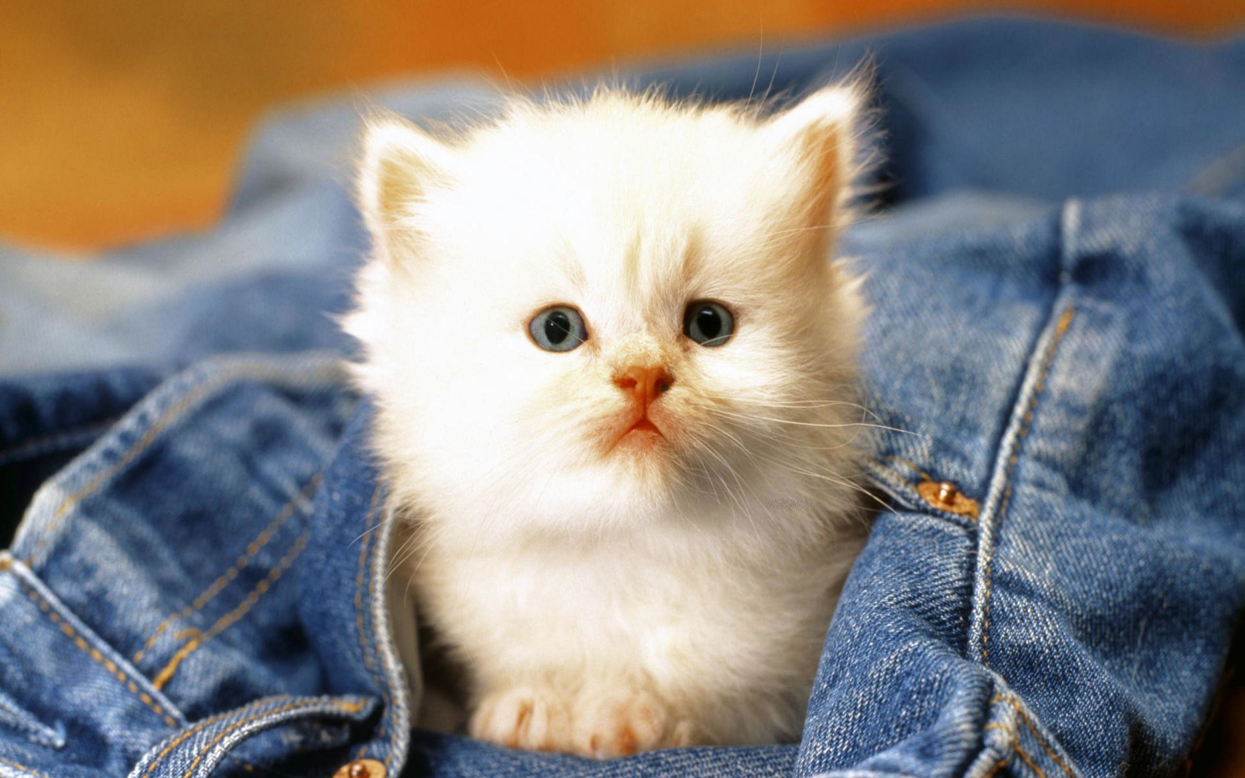 Res: 2560x1600, Cute Cat Wallpapers 21829 Hd Wallpapers in Cute - Telusers.com