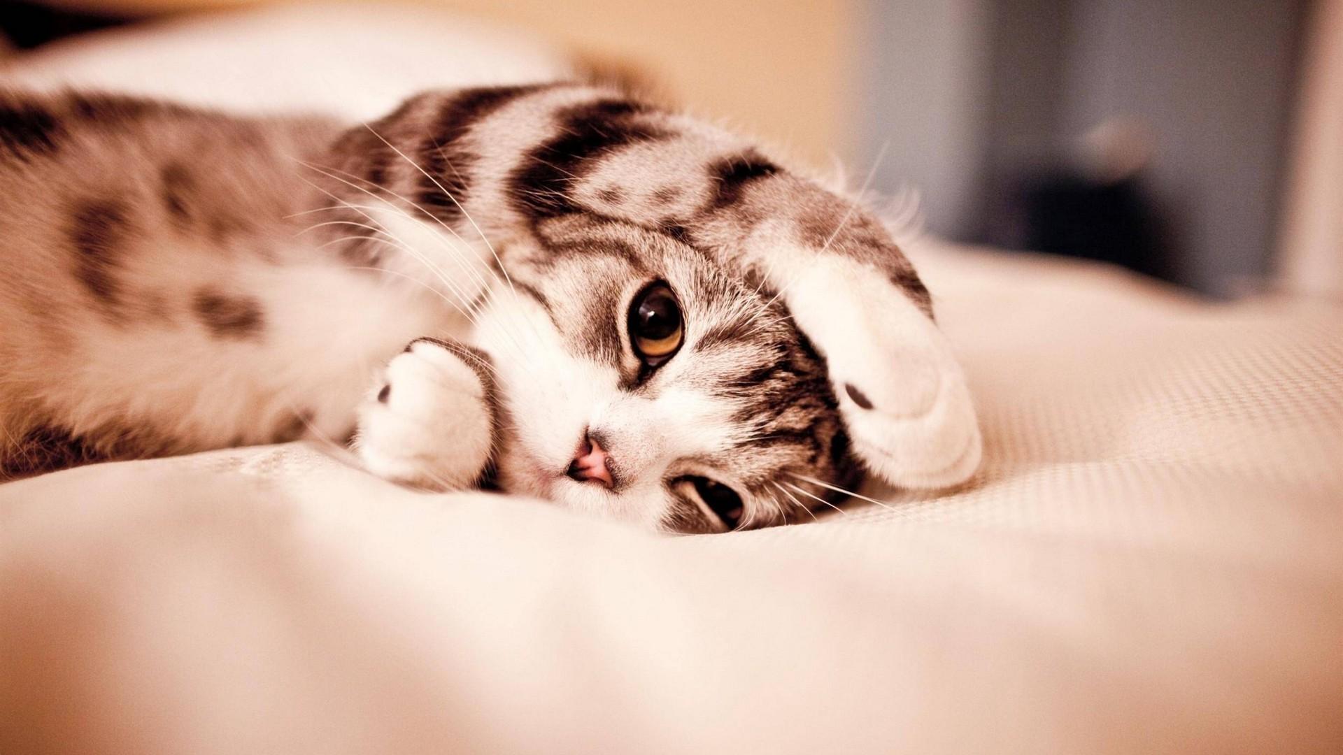 Res: 1920x1080, Cute Cat Wallpaper HD