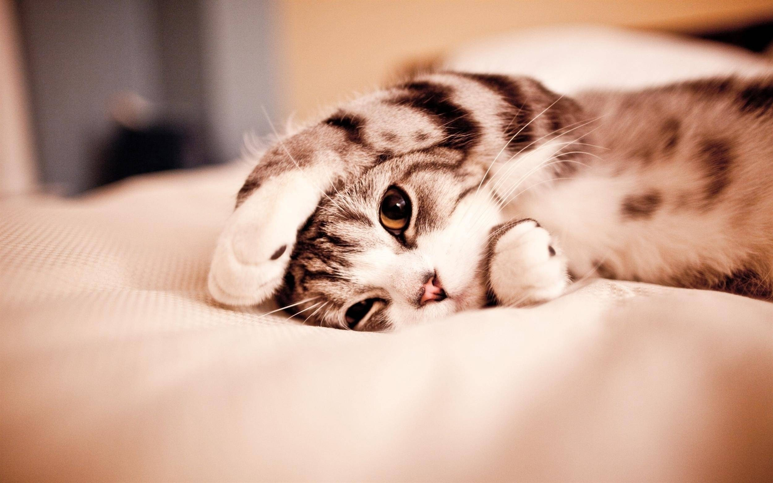 Res: 2500x1562, Cute Cats Wallpapers – Wallpaper Cave for Cute Cat Background