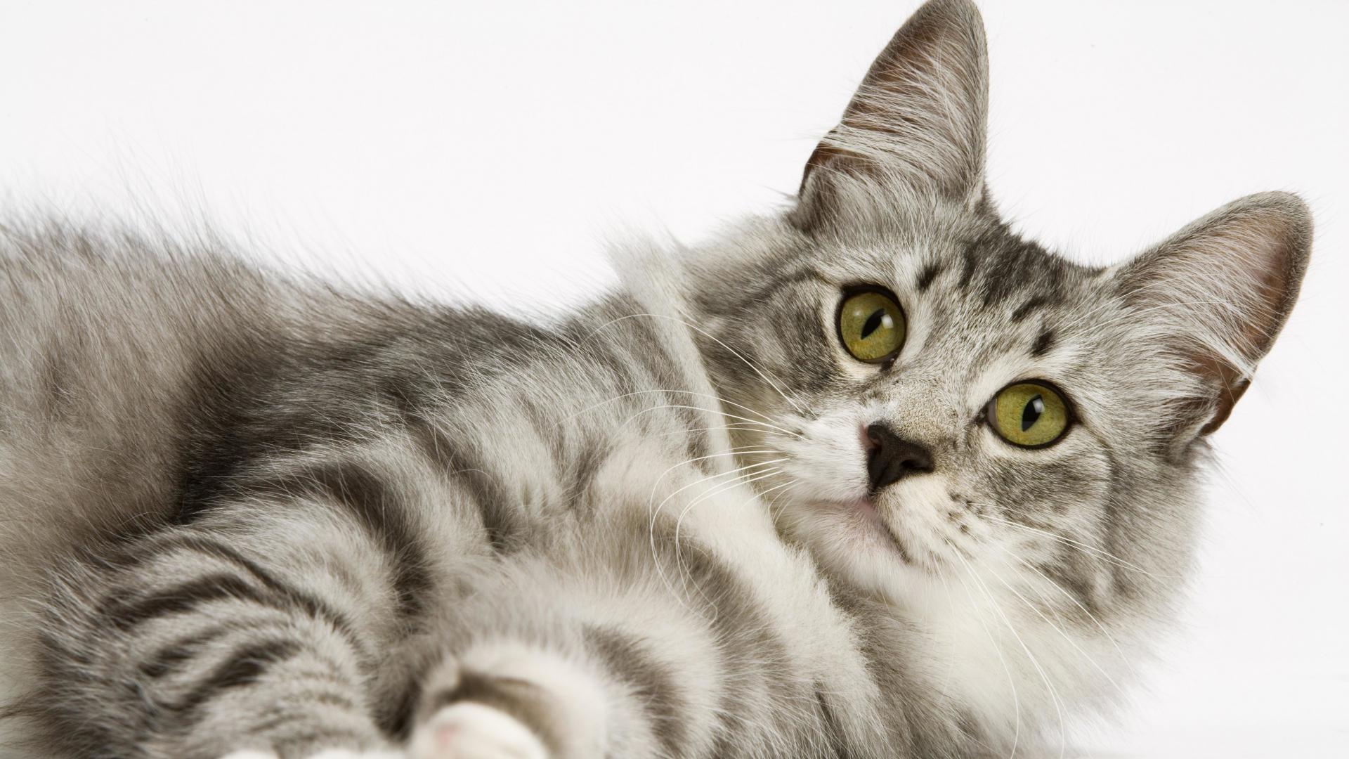 Res: 1920x1080, Cat Wallpaper 7