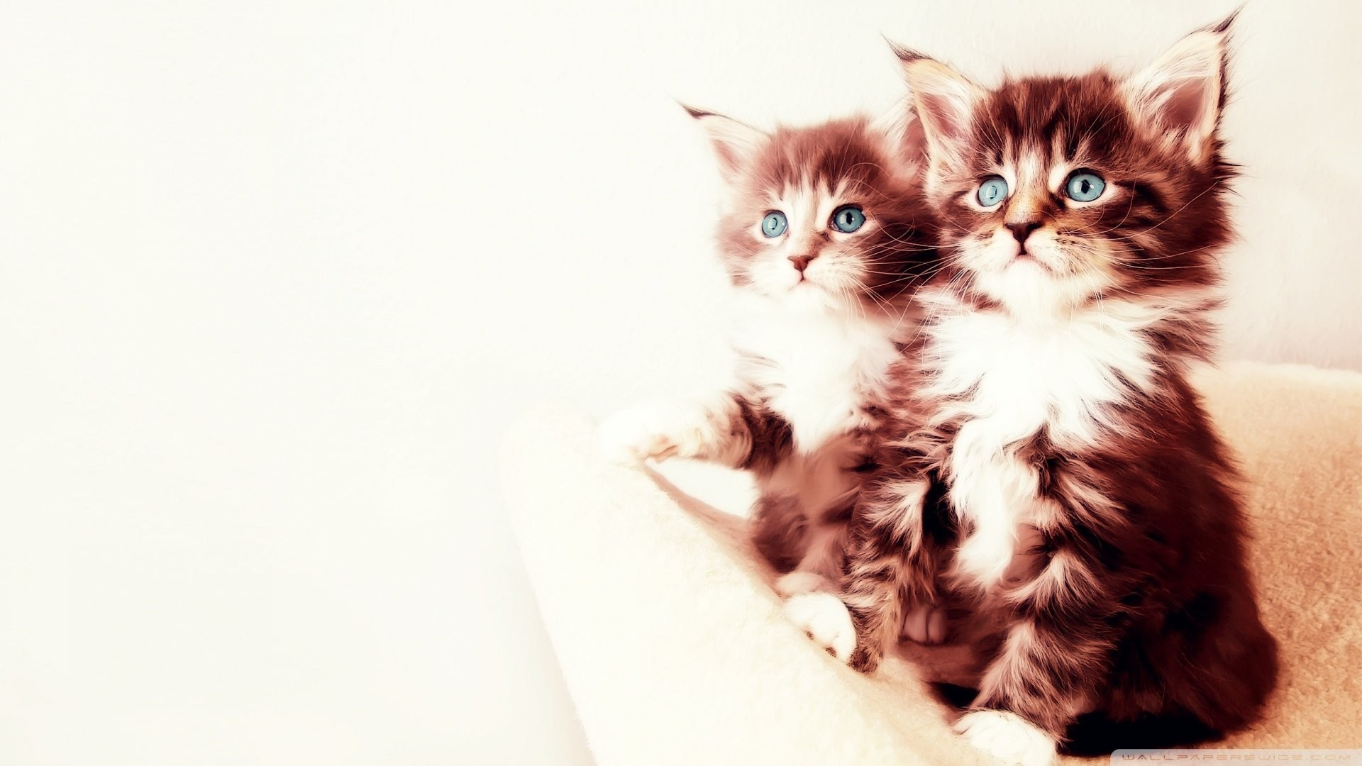 Res: 1920x1080, two cute cats wallpaper