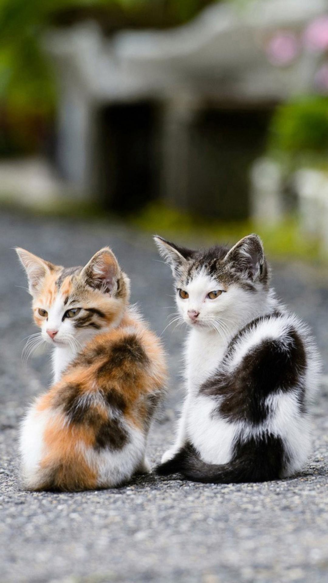 Res: 1080x1920, cute cat wallpaper iphone #691323 .