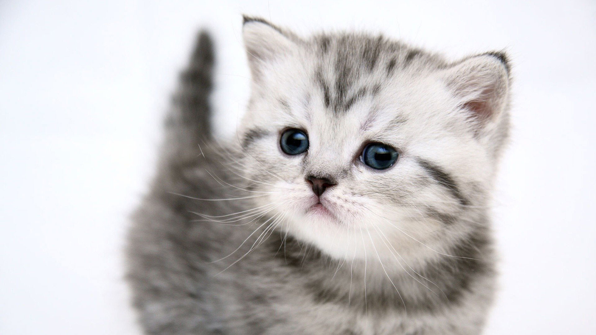Res: 1920x1080, HD Cute Cat Wallpapers #8RURP32