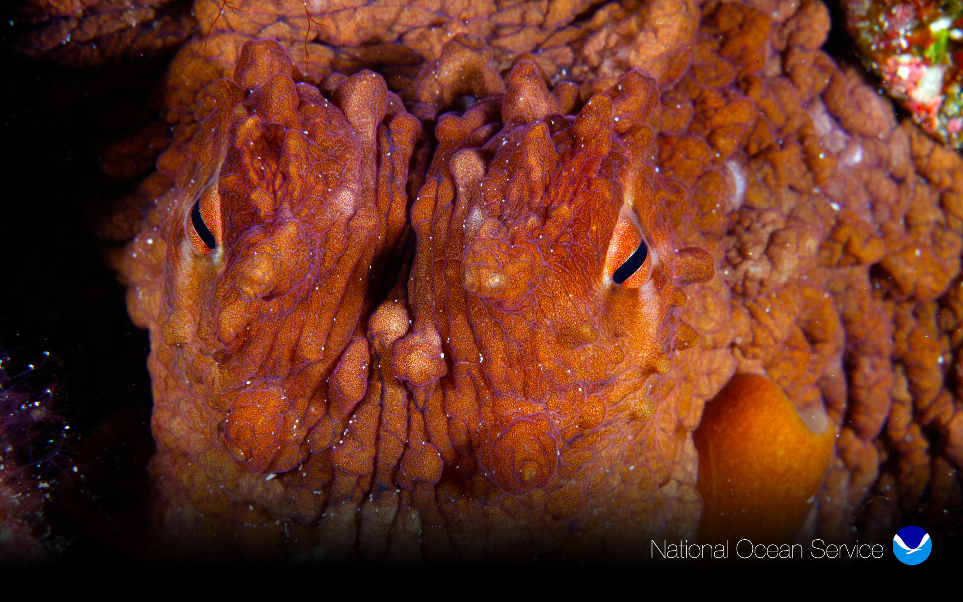 Res: 1920x1200, Octopus Eyes (Greg McFall)