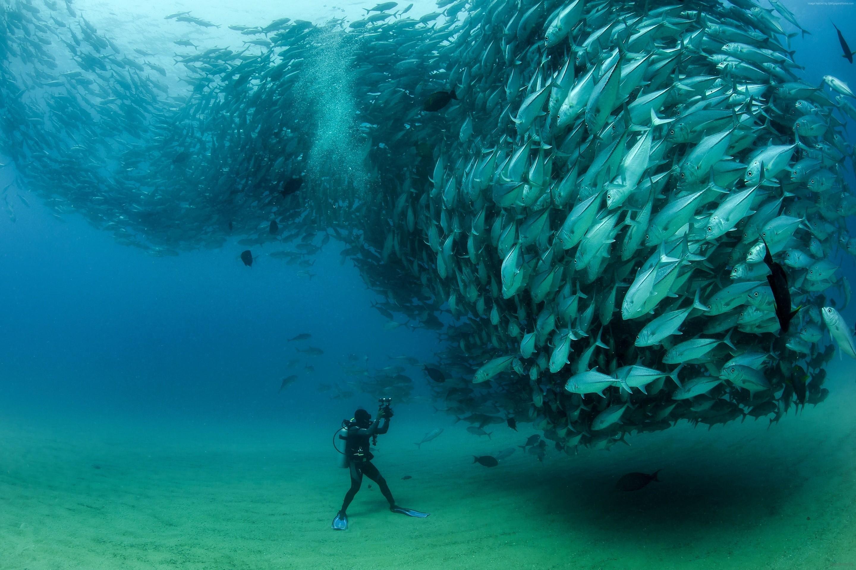 Res: 2880x1916, Under Ocean Wallpaper 1080p