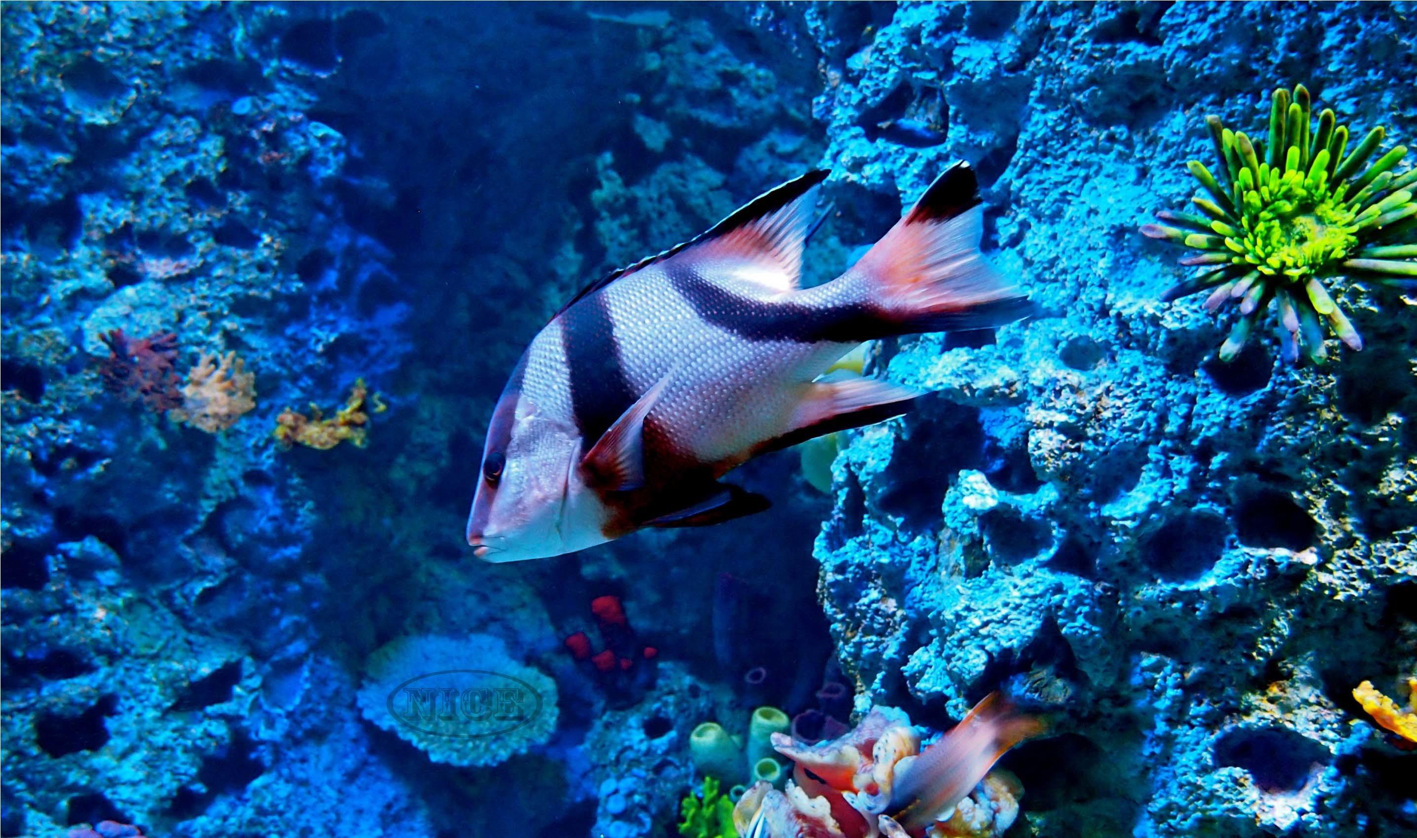 Res: 2873x1700,  Ocean Life Wallpapers