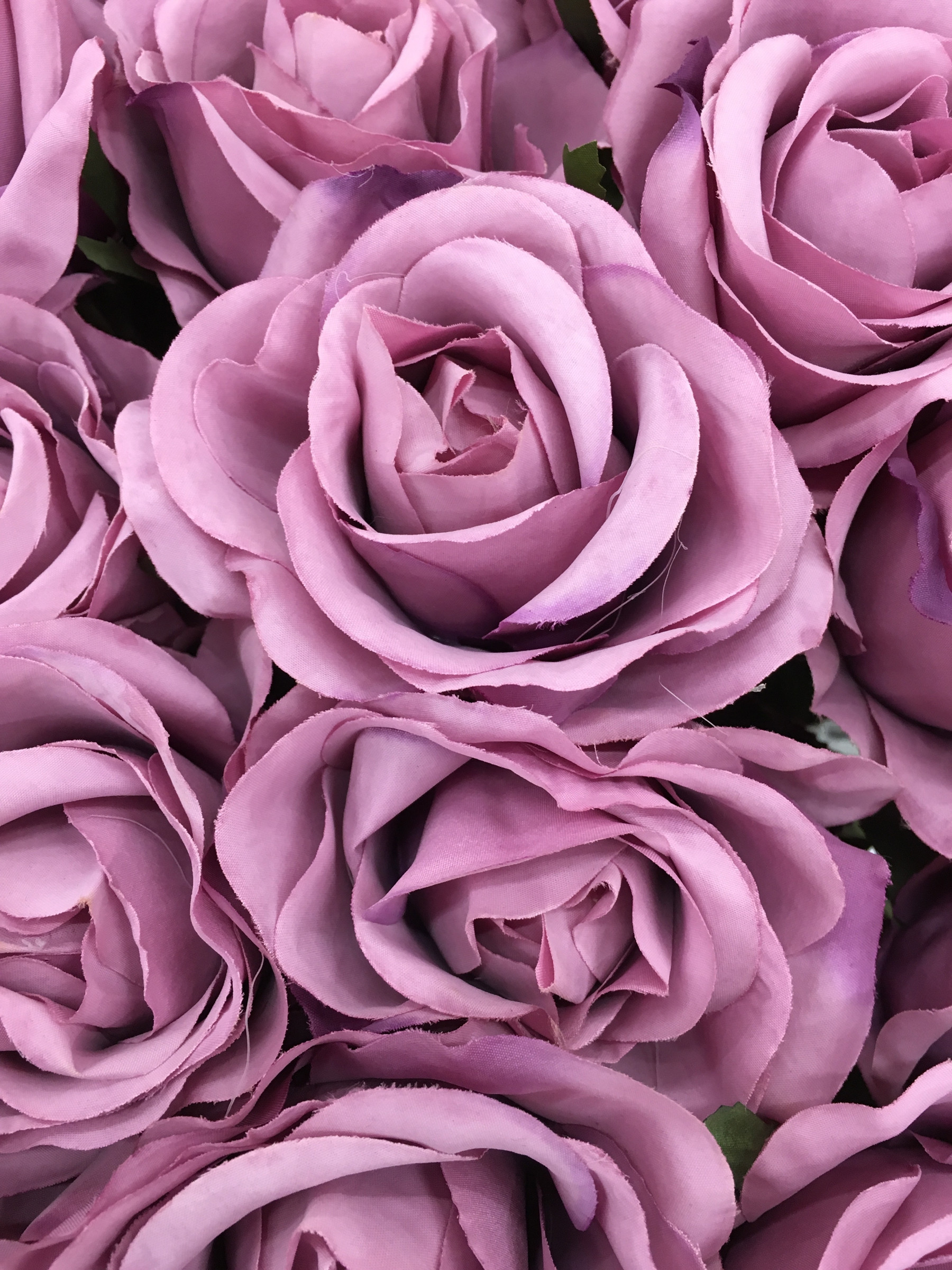 Res: 1800x2400, The color purple rose flowers 52757