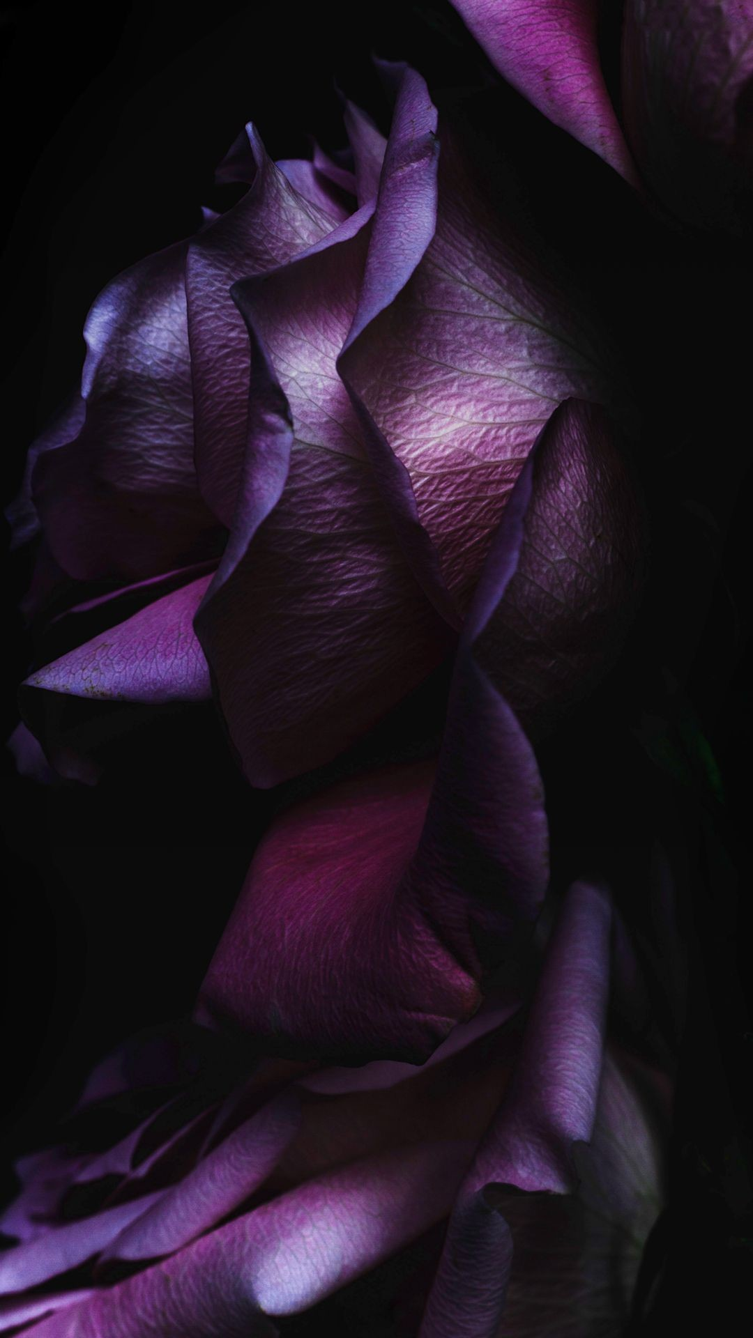 Res: 1080x1920, iOS9 Purple Rose Flower Art Wallpaper #iPhone #6 #wallpaper