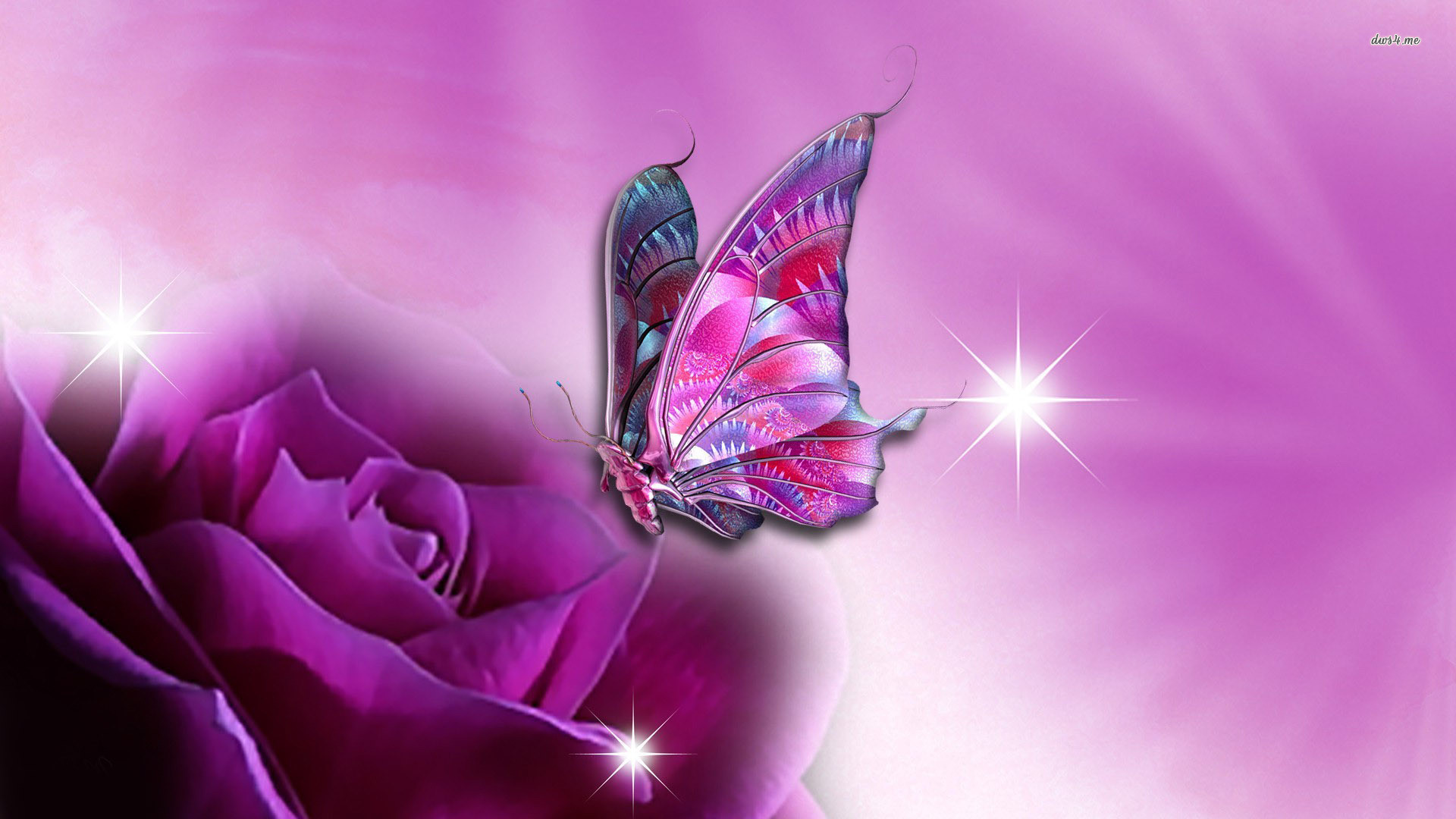 Res: 1920x1080, ... Butterfly on purple rose wallpaper  ...