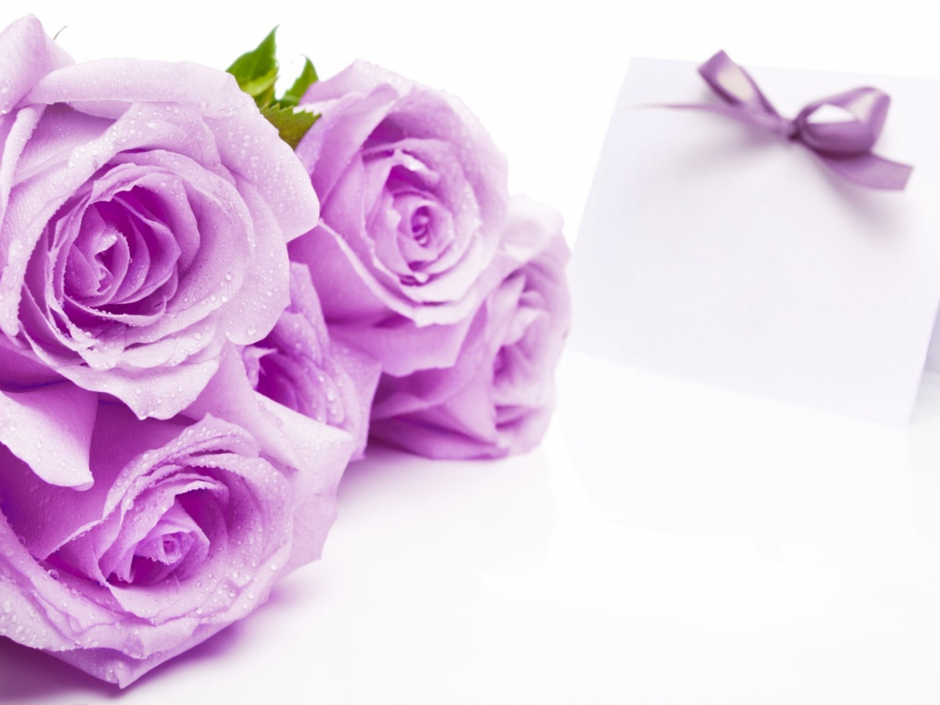 Res: 1920x1440, Farben images Purple Rose Hintergrund HD wallpaper and background photos