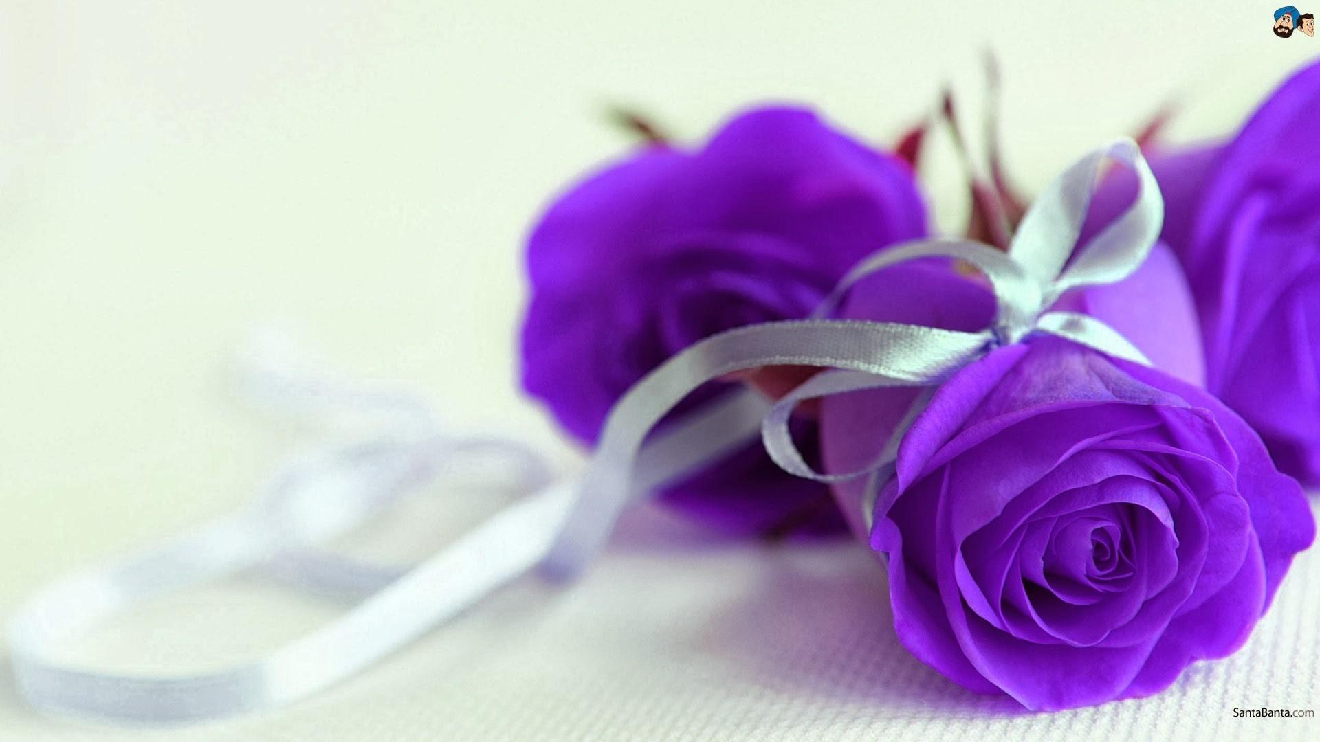 Res: 1920x1080, purple rose wallpaper hd #990460