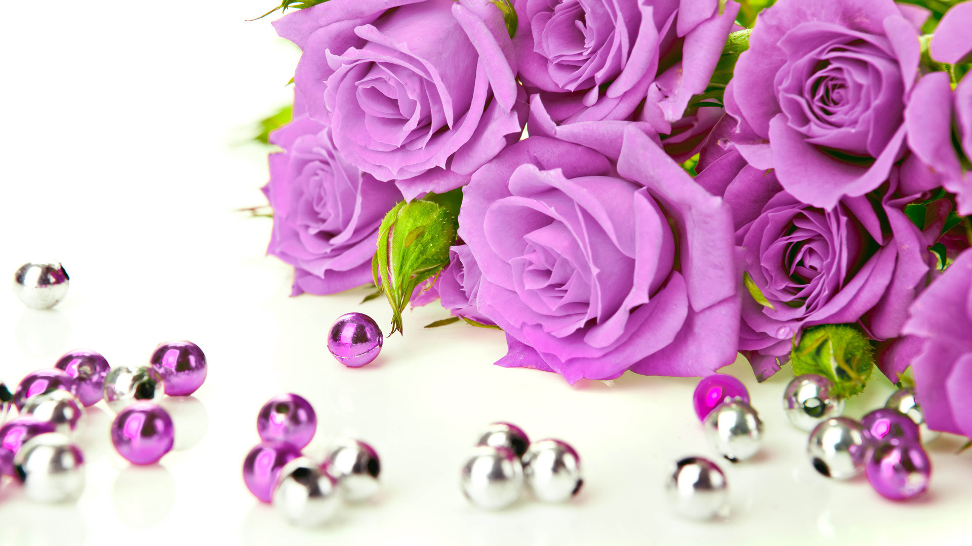 Res: 1920x1080, Beautiful photo gallery of purple rose wallpapers hd, Free download purple  pictures. You can download these high resolution purple rose images and use  as ...