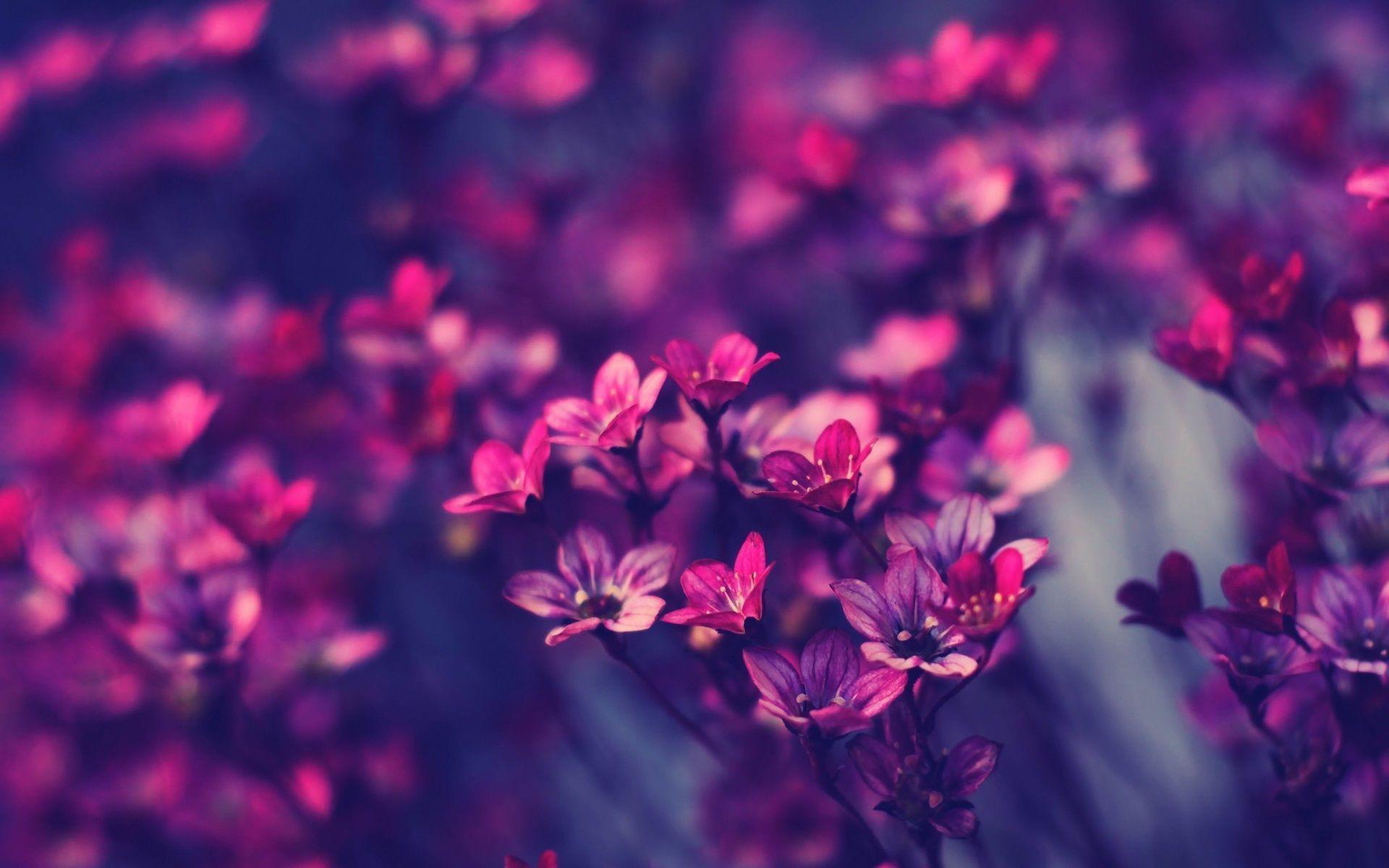 Res: 1920x1200, Purple Flower Wallpaper Free