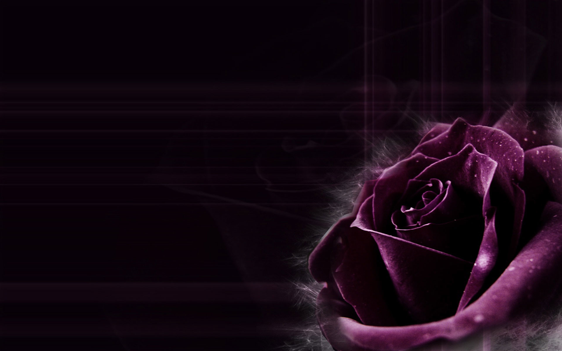 Res: 1920x1200, Dark Purple Rose Backgrounds Images Pictures Becuo