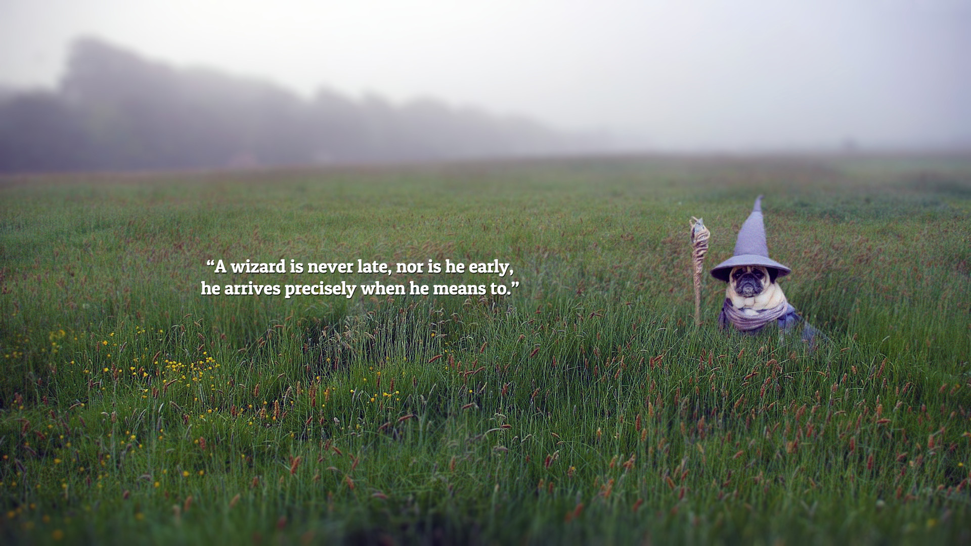 Res: 1920x1080, A wizard is Never Late - Pug Wallpaper [] ...