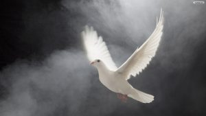 White Dove wallpapers