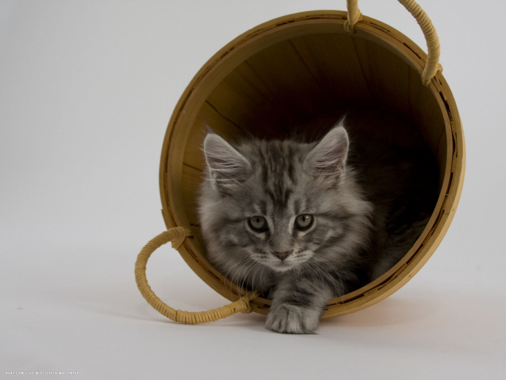 Res: 1920x1440, maine coon 25