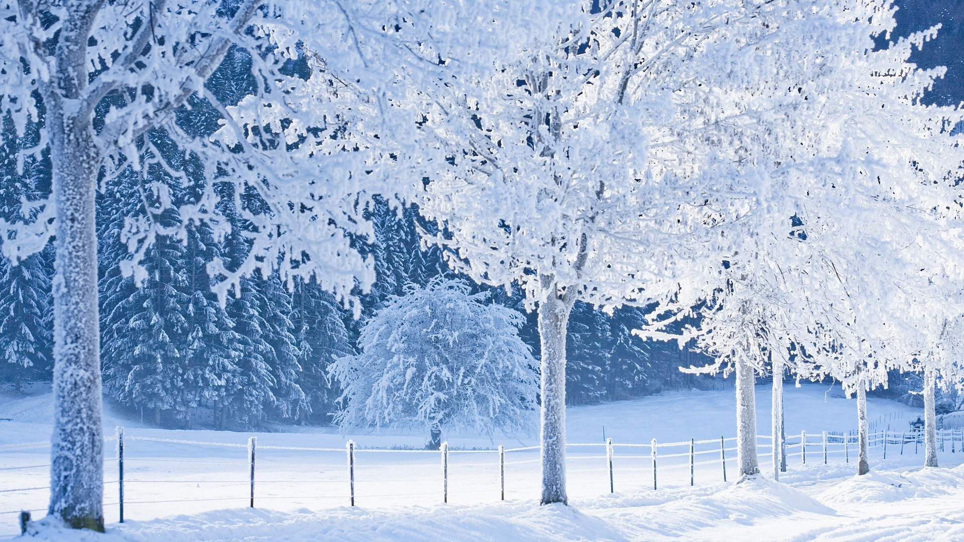 Res: 1920x1080, Real Snowy Backgrounds wallpaper Real Snowy Backgrounds hd wallpaper