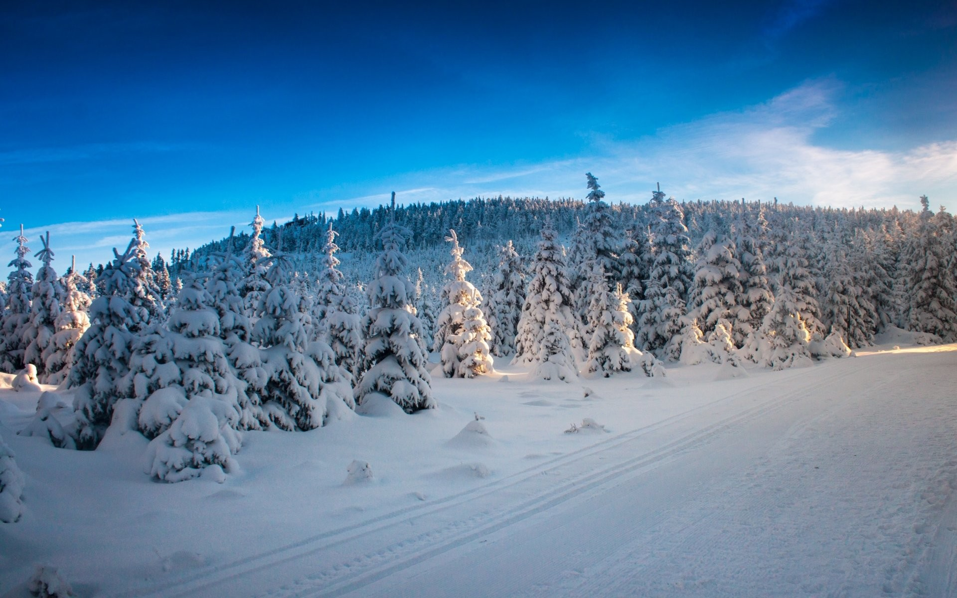 Res: 1920x1200, Bild: Himmel Winter-Bäume Snowy wallpapers and stock photos. «