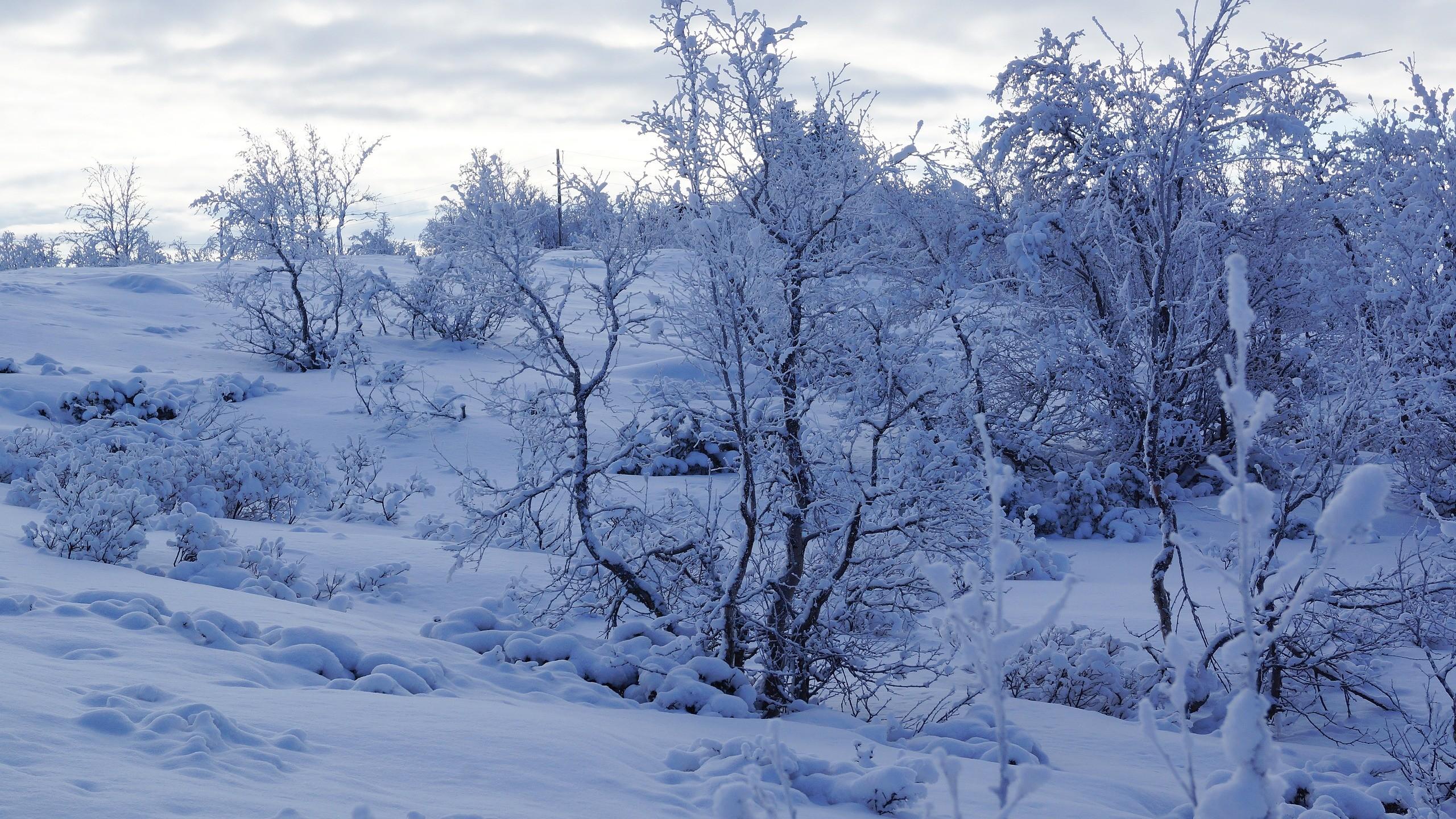 Res: 2560x1440,  Wallpaper trees, snow, winter, snowy